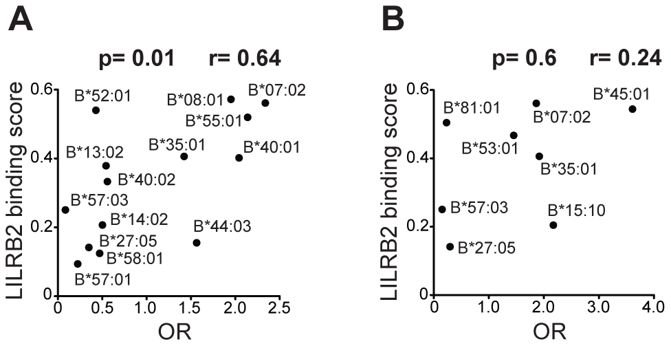 LILRB2 binding strength and odds ratios for viral load control for individual <i>HLA-B</i> alleles.