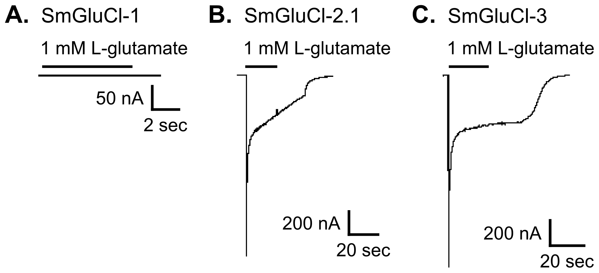 Functional expression of SmGluCl-1, SmGluCl-2, and SmGluCl-3 homo-oligomers in <i>Xenopus</i> oocytes.