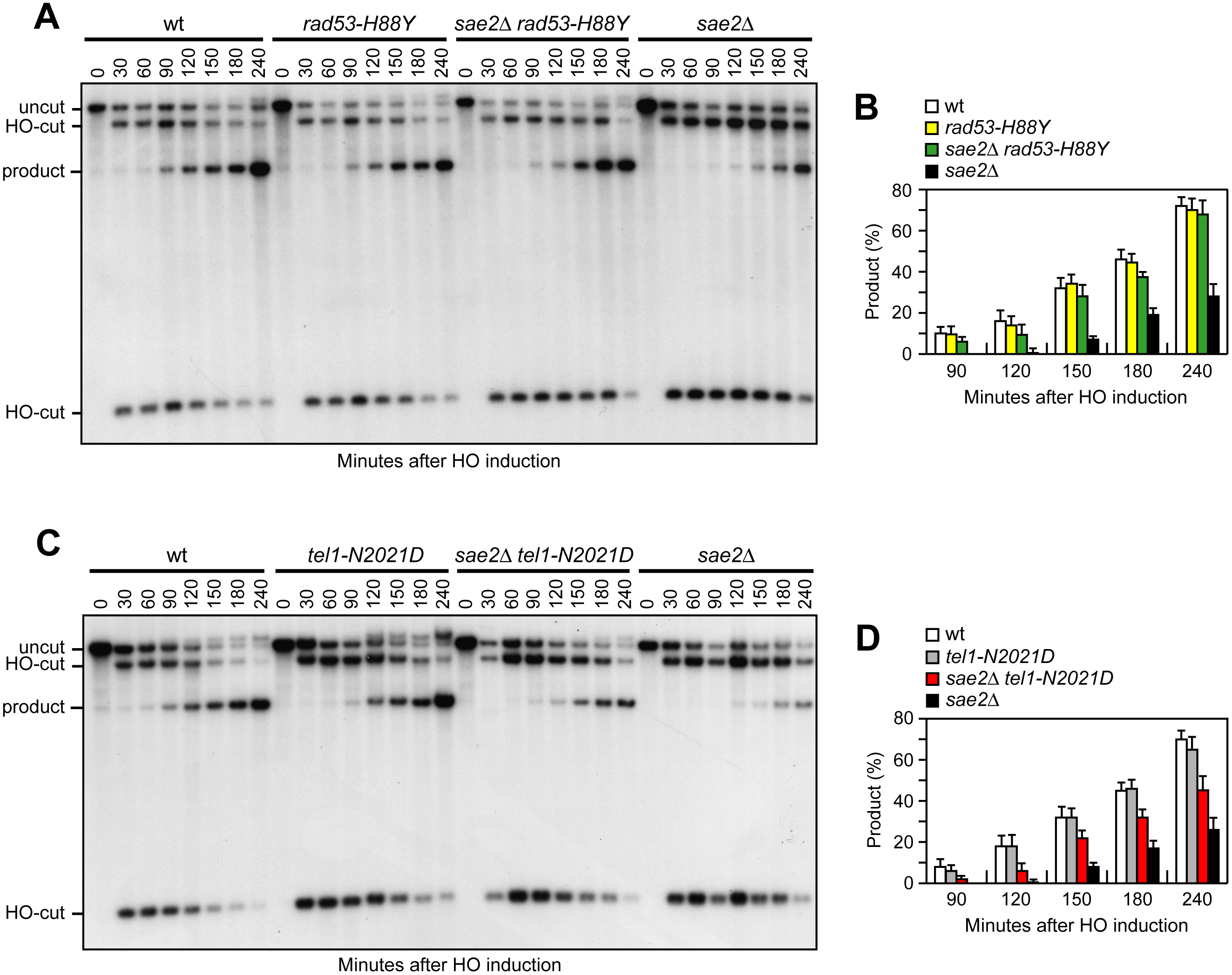 Rad53-H88Y and Tel1-N2021D suppress the SSA defect of <i>sae2</i>Δ cells.