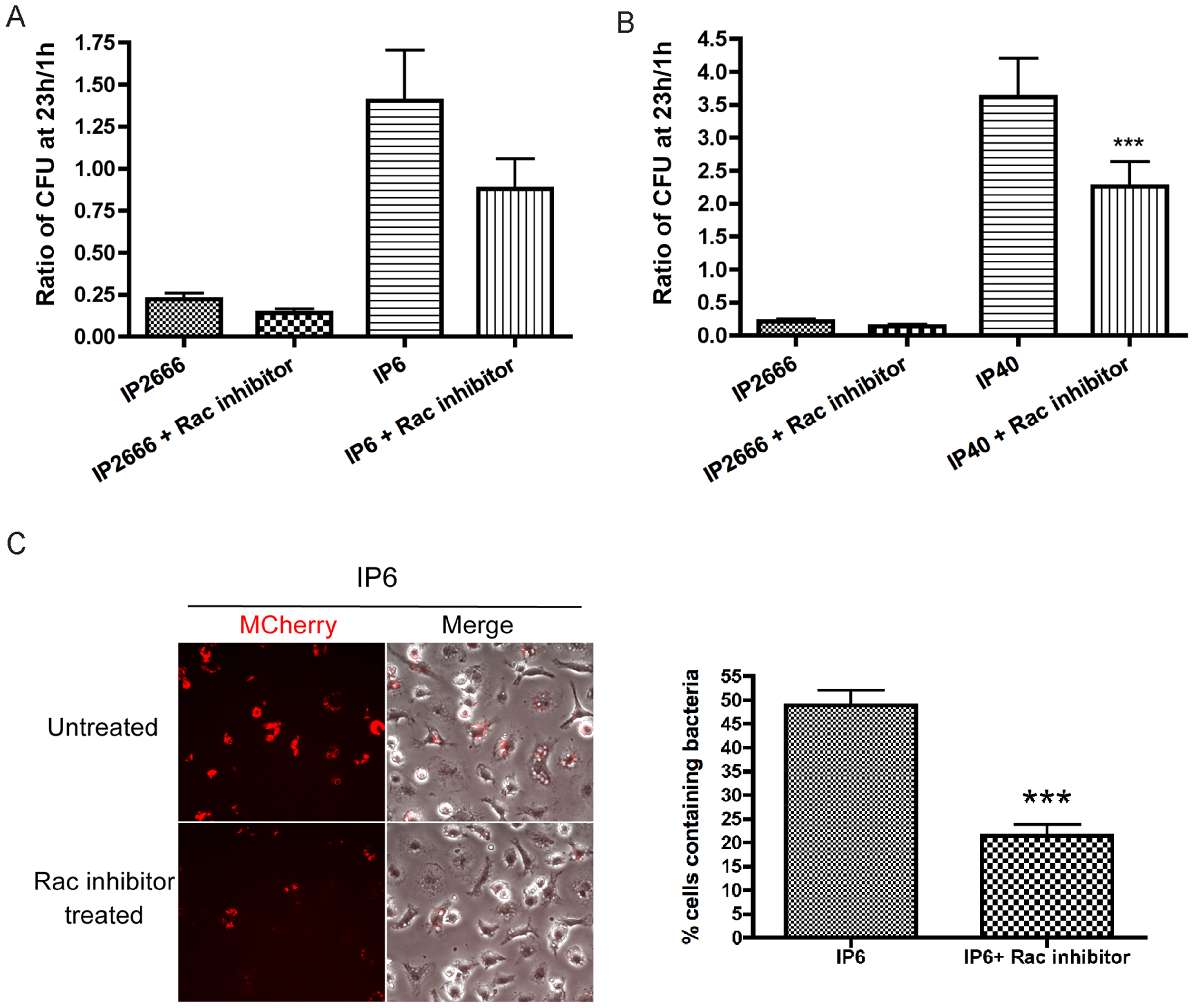 Survival of different <i>Y. pseudotuberculosis</i> strains inside macrophages, in the presence or absence of Rac inhibitor NSC23766.