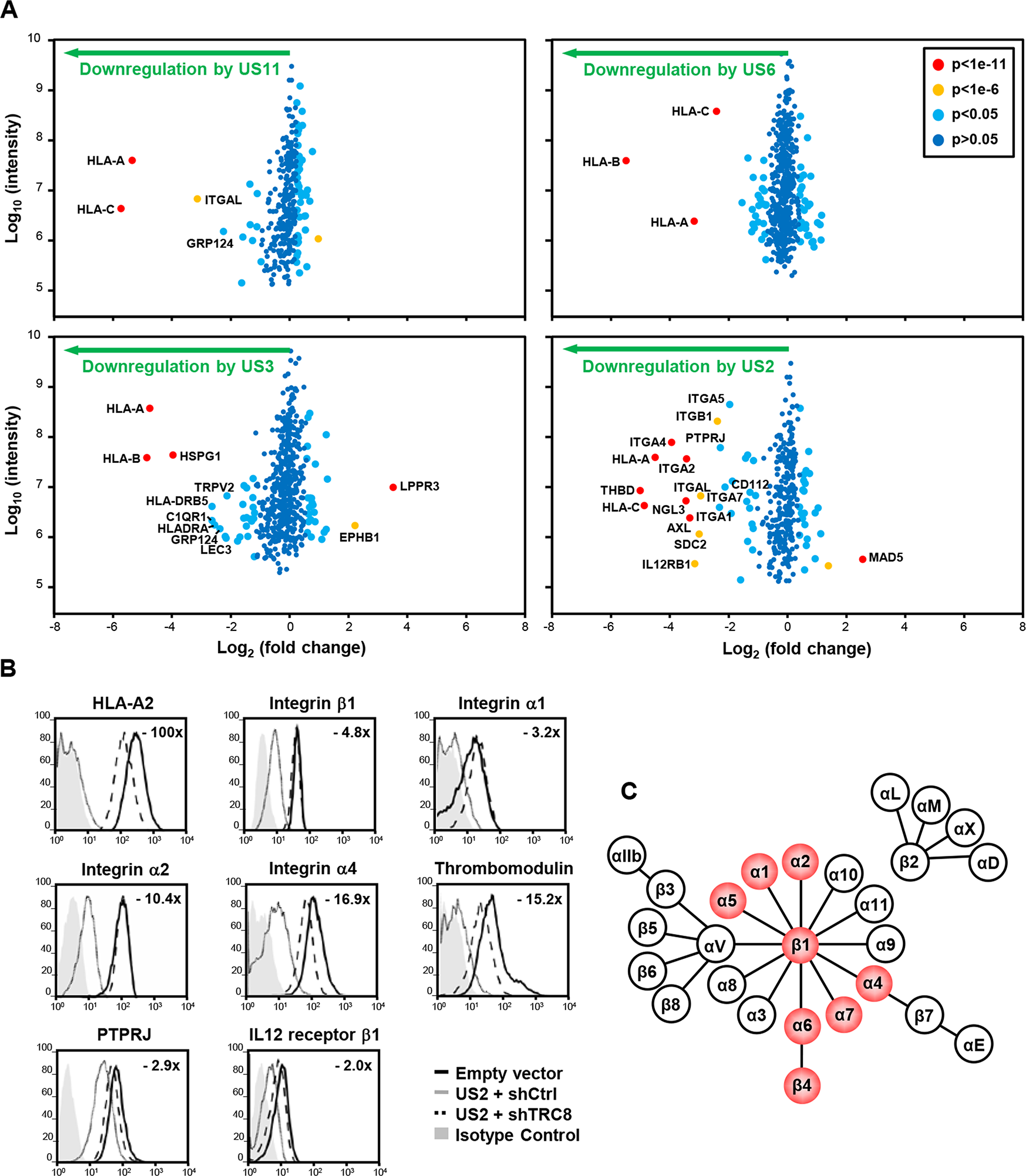 Identification of novel US2 specific substrates by plasma membrane profiling.