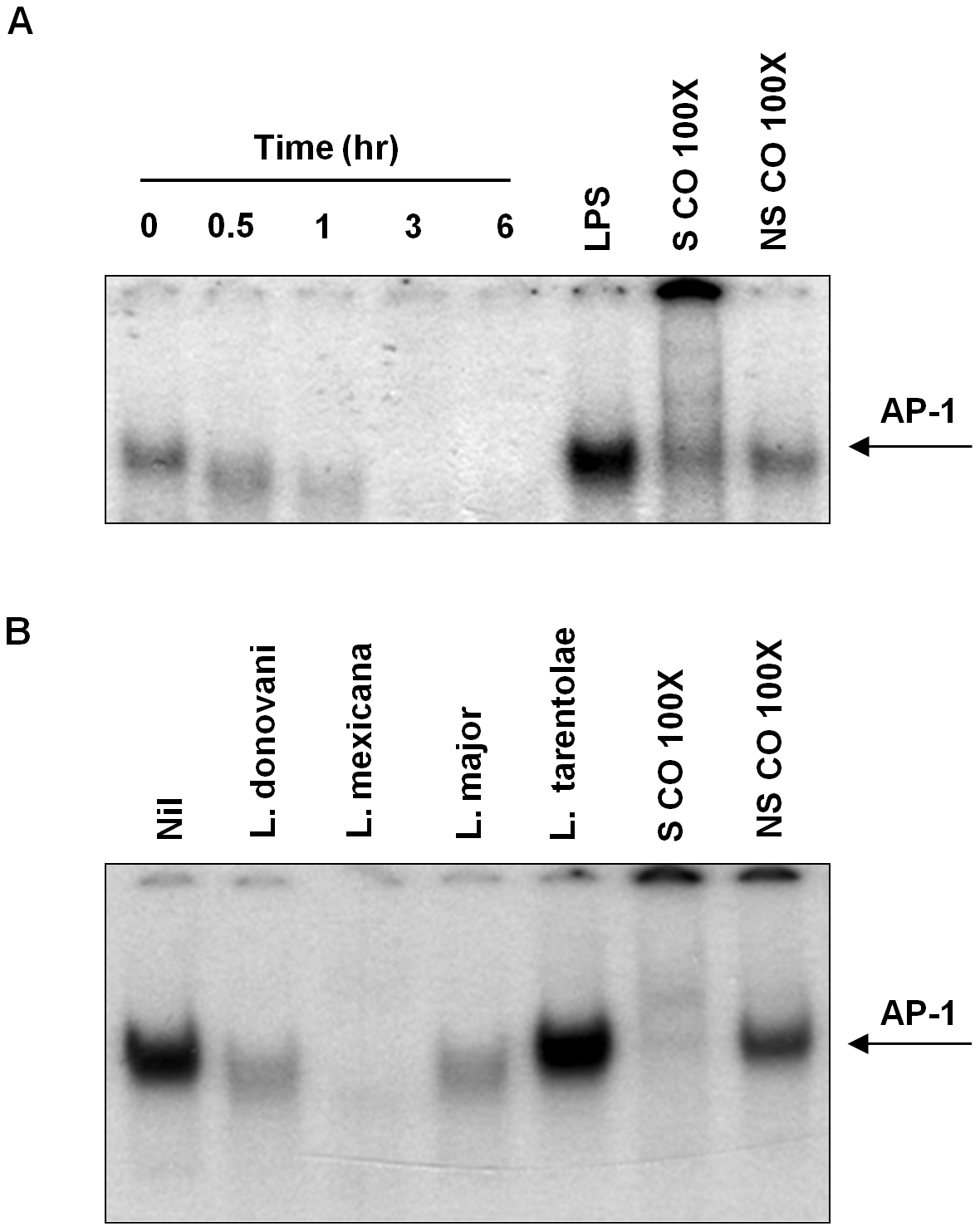 Infection with different species of <i>Leishmania</i> inhibits AP-1 DNA binding activity.