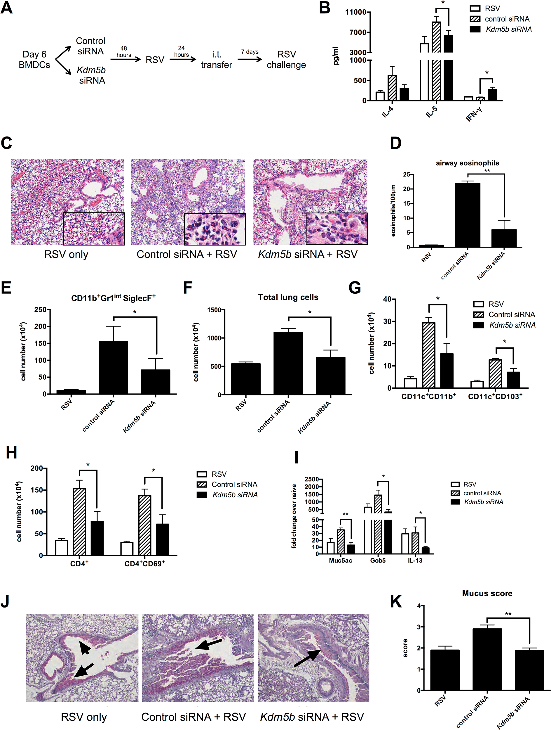Transfer of RSV-infected <i>Kdm5b</i>-deficient DCs leads to a decreased pathogenic pulmonary RSV challenge.