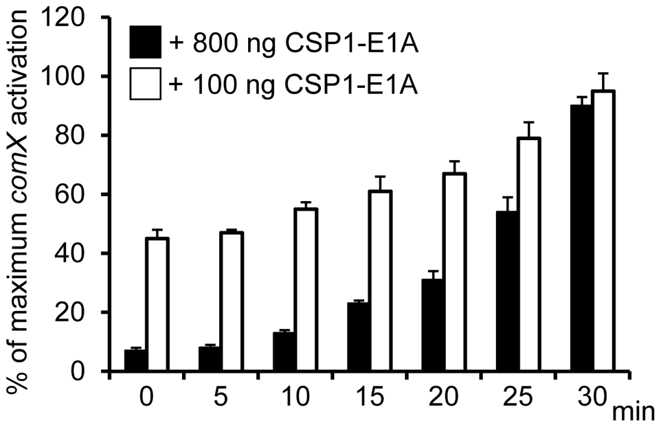 Time-dependent inhibition of CSP1 by CSP1-E1A.