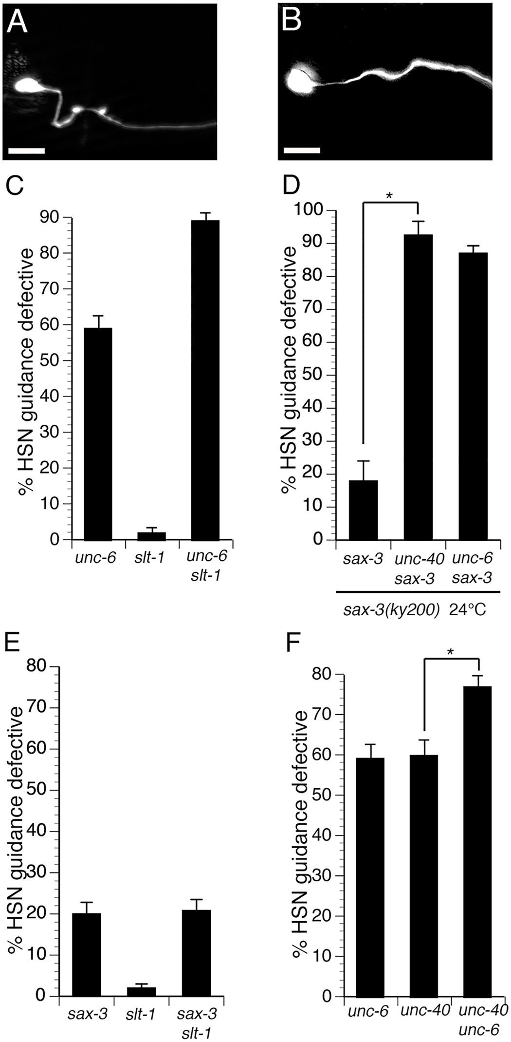 Interactions between the UNC-6 and SLT-1 signaling pathways in the HSN neuron.