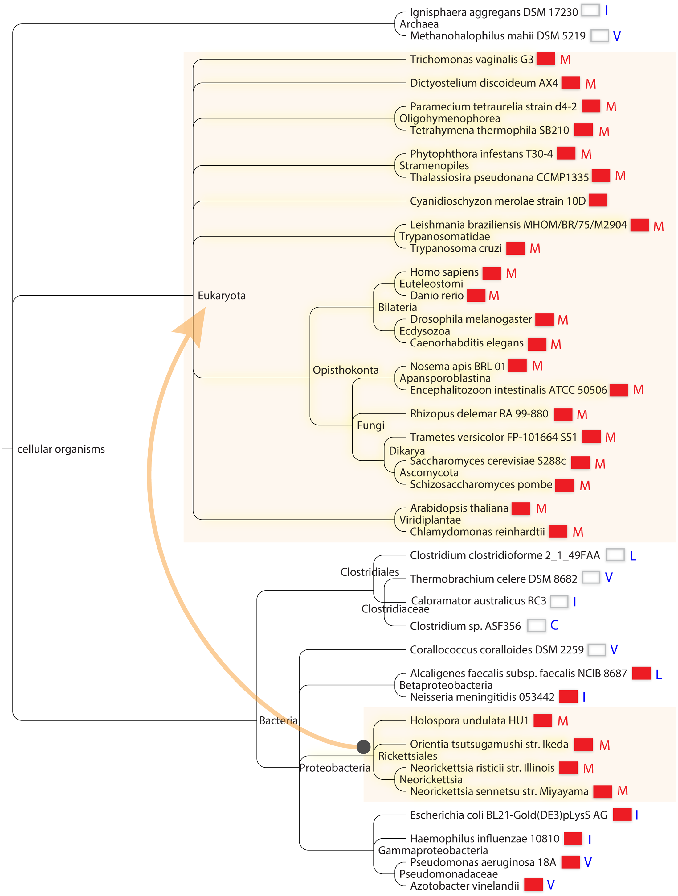 Cosegregation of Isu1/IscU-M and frataxin in global taxonomy.