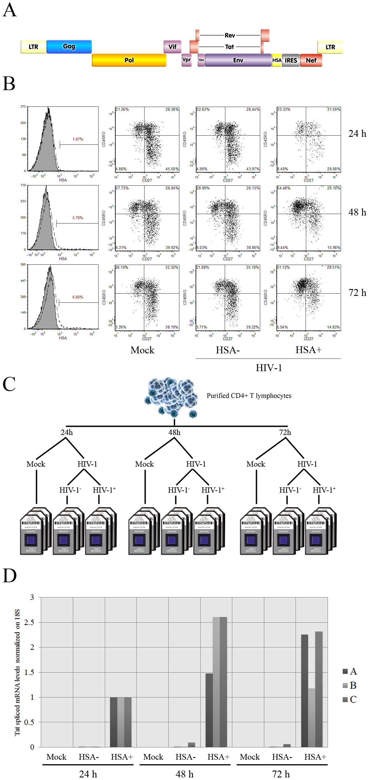 Isolation and characterization of HIV-1-infected cells.