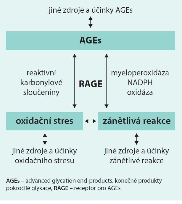 Schéma 1. Souvislost AGEs – RAGE – oxidační stres a zánět