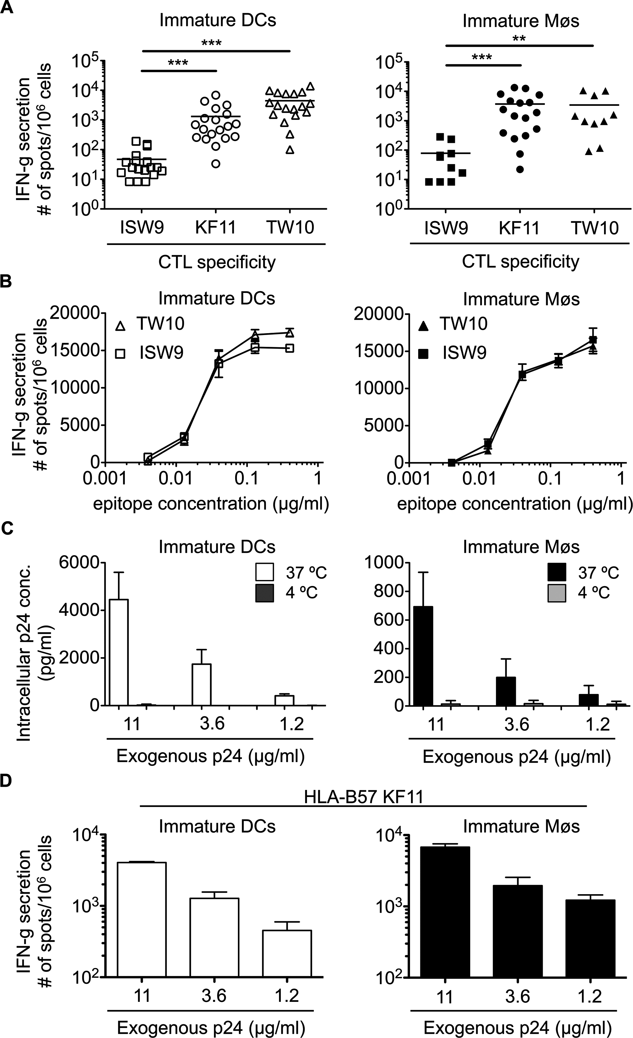The immunodominant HLA-B57-restricted TW10 and KF11 epitopes are more efficiently cross-presented than subdominant ISW9 epitope.