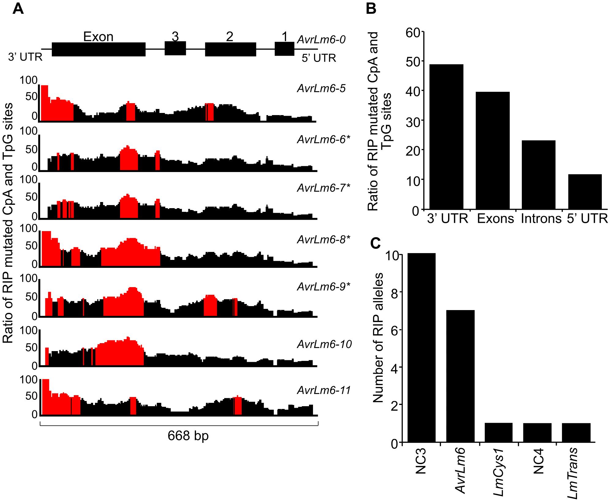 Distribution of RIP mutations across the <i>AvrLm1-LmCys2</i> genomic region in <i>Leptosphaeria maculans</i>.