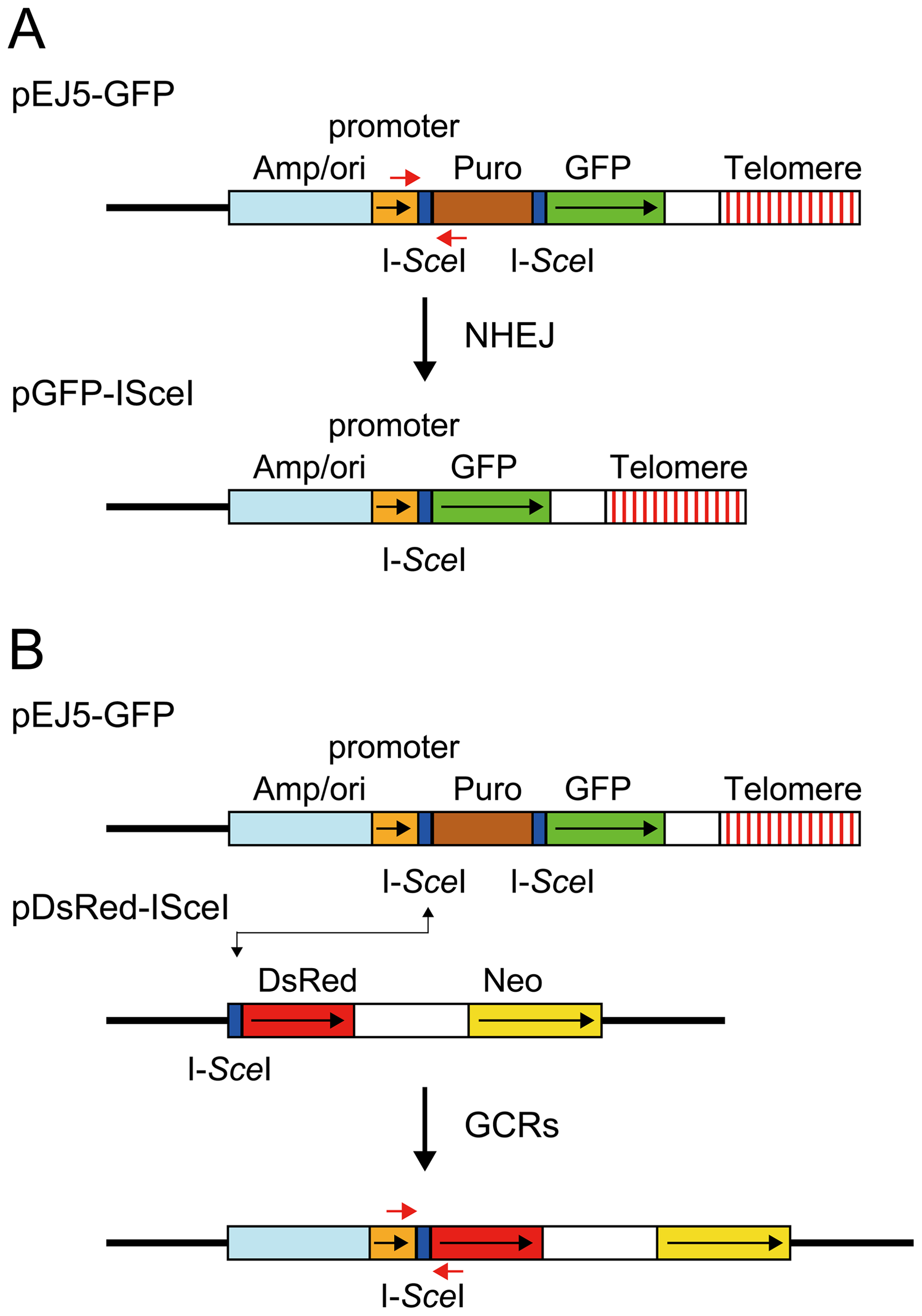 The structure of the plasmids used to monitor NHEJ, GCRs, and large deletions.