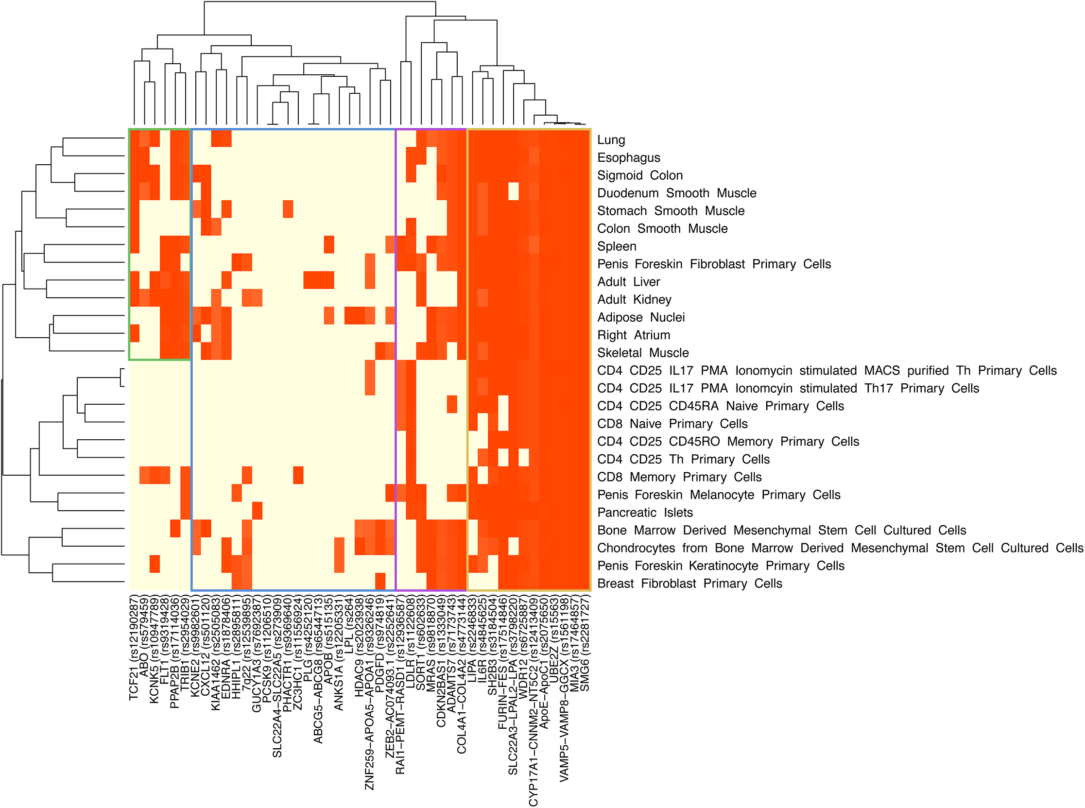 Hierarchical clustering of 45 MI/CAD GWAS SNPs and specific cell types for a histone modification mark (H3K27ac).