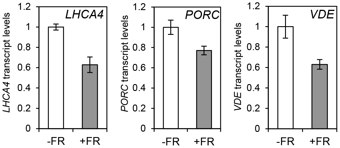 Photopigment gene expression response to an End of Day (EOD)-Far Red (FR) light treatment in Col-0.