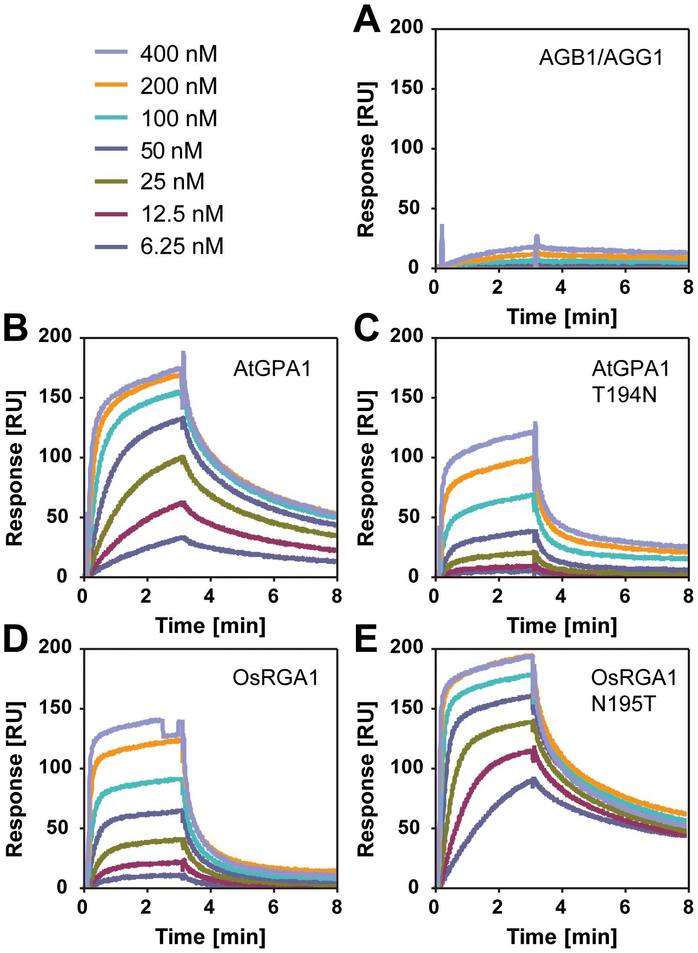 Affinity of plant Gα to AtRGS1 immobilized on the SPR biosensor.
