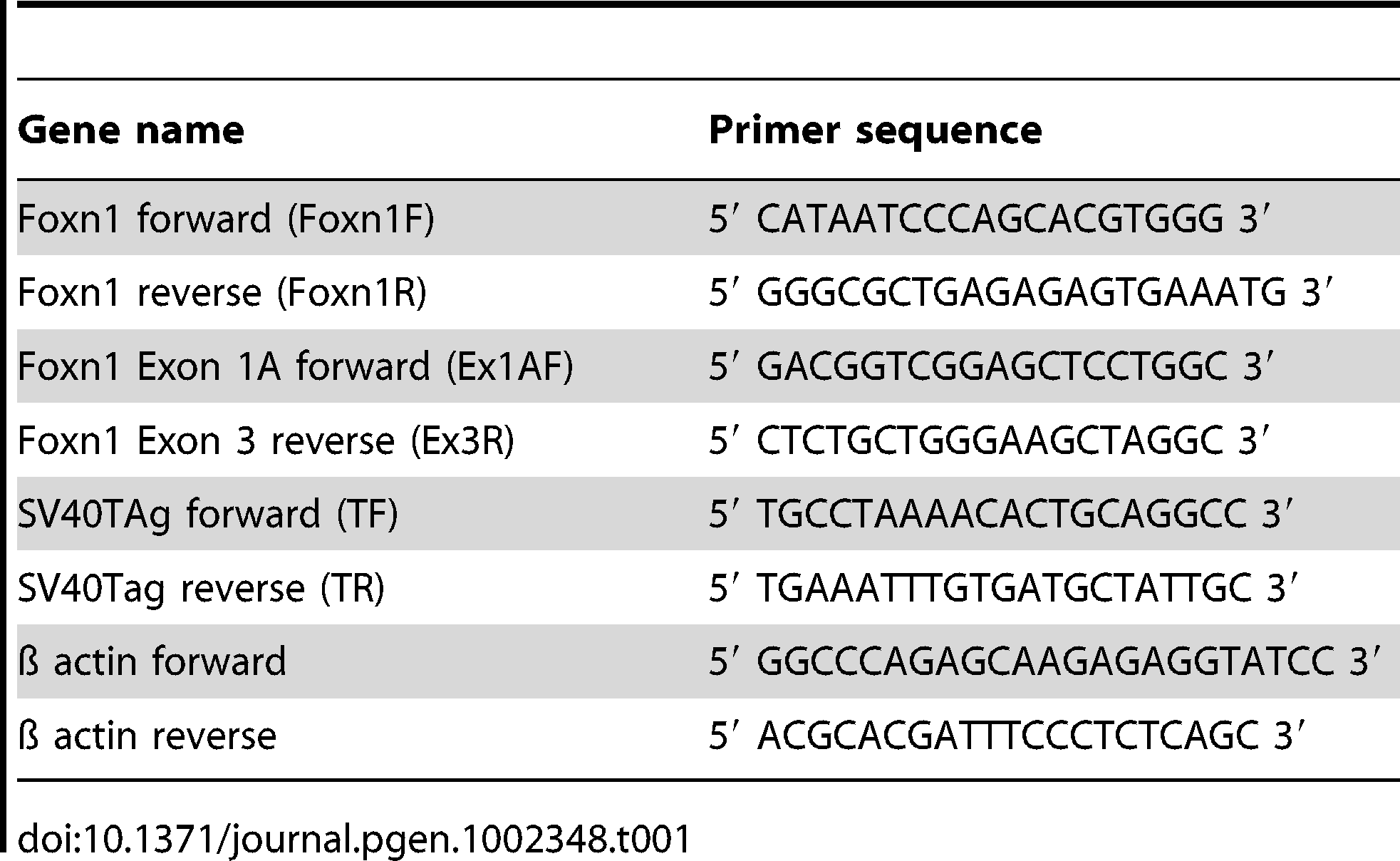 Primer sequences used for conventional PCR.