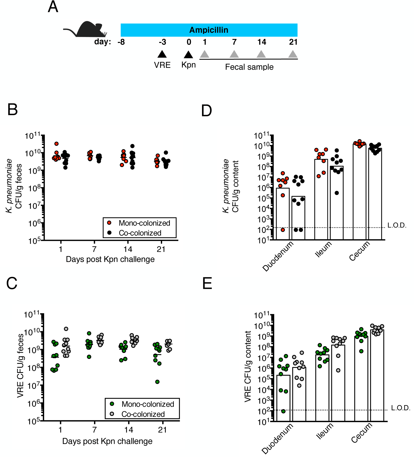 Pre-colonization with VRE does not prevent colonization by <i>K</i>. <i>pneumoniae</i>.