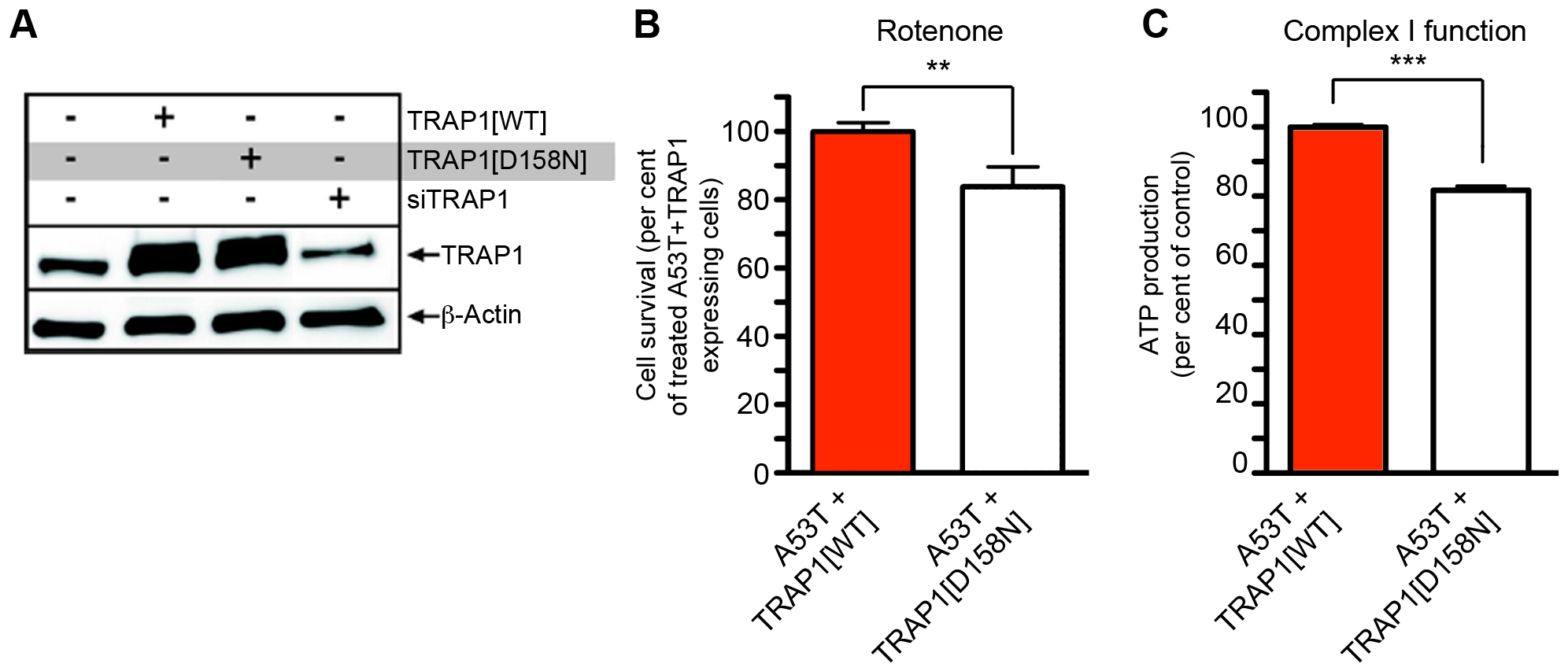 Effect of TRAP1 mutation on modification of [A53T]α-Synuclein toxicity.