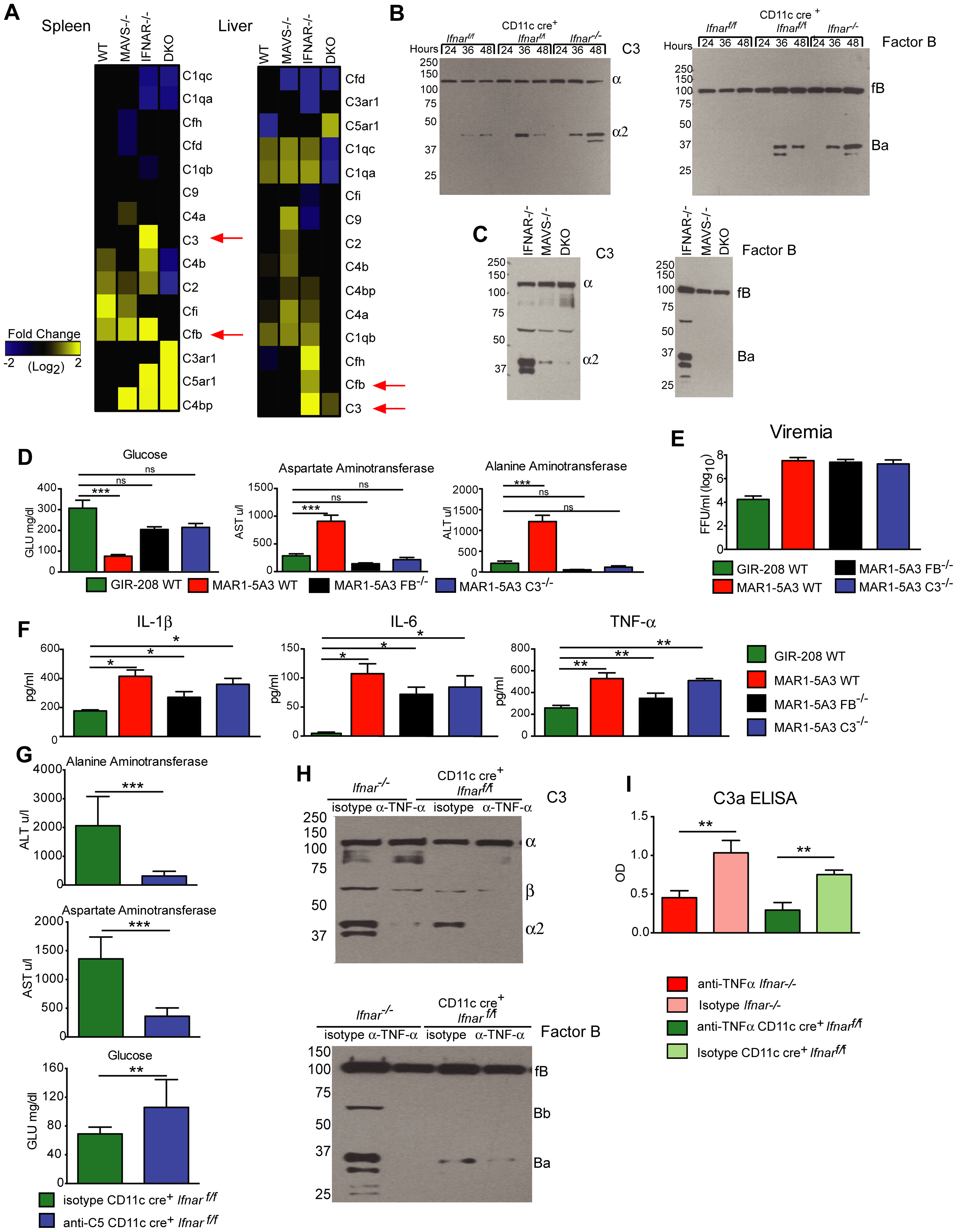 Complement activation contributes to liver injury after WNV infection.