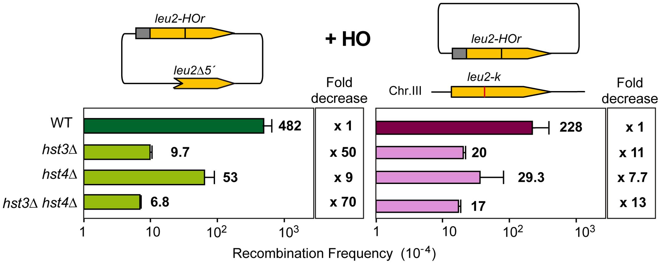 Effect of H3K56 acetylation/deacetylation on genetic SCR.