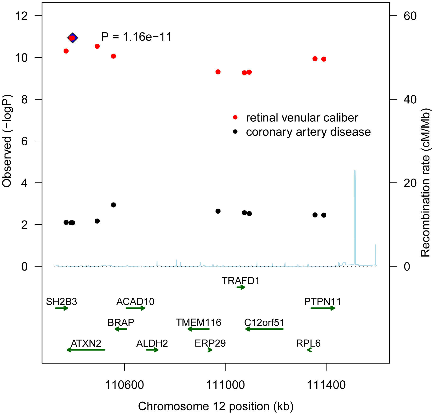 A combined regional association plot showing p-values from CHARGE for the 10 SNPs on 12q24 for retinal venular caliber and from WTCCC for coronary artery disease.