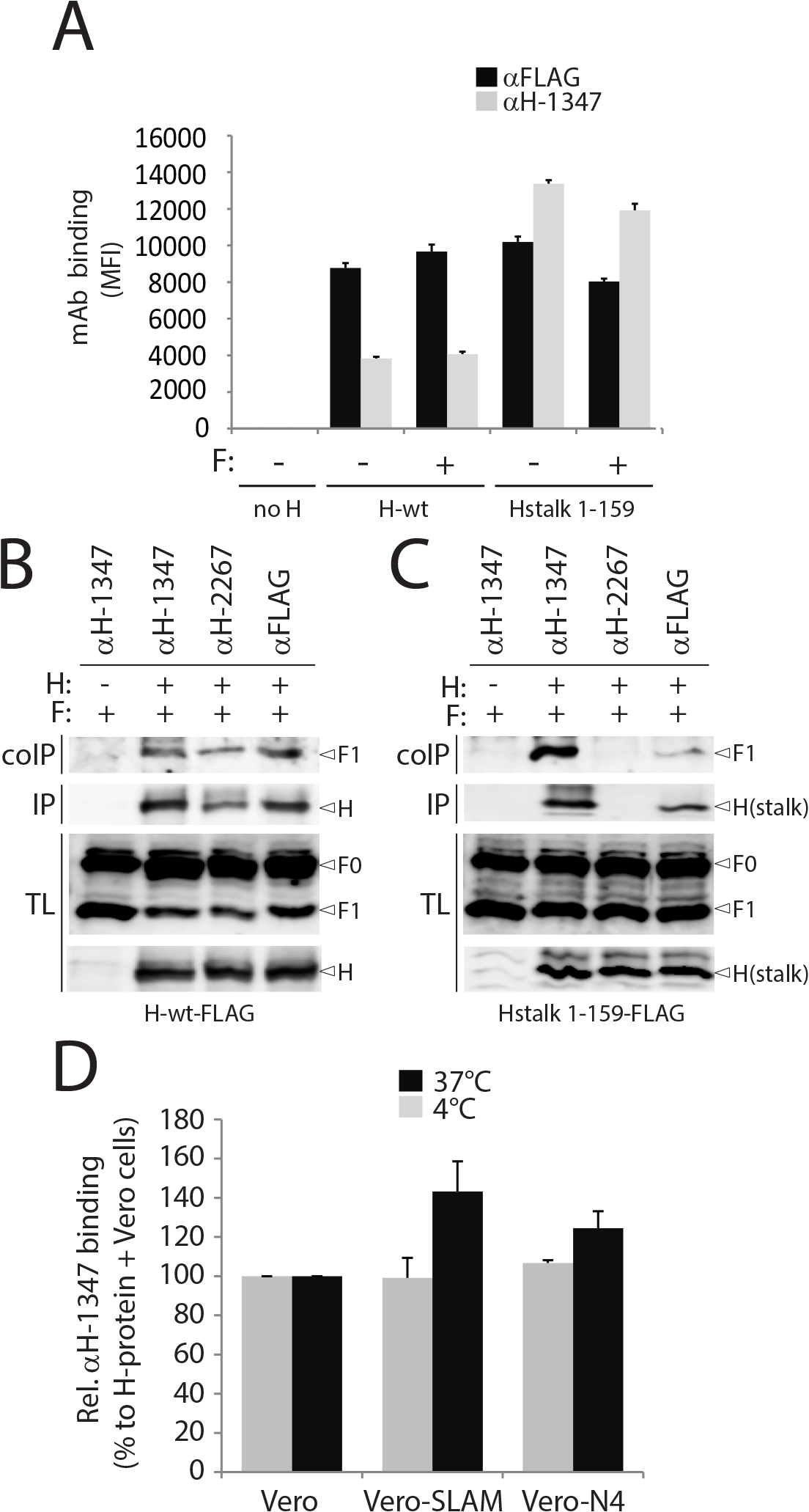 Receptor-induced conformational change in H detected by mAb αH-1347.
