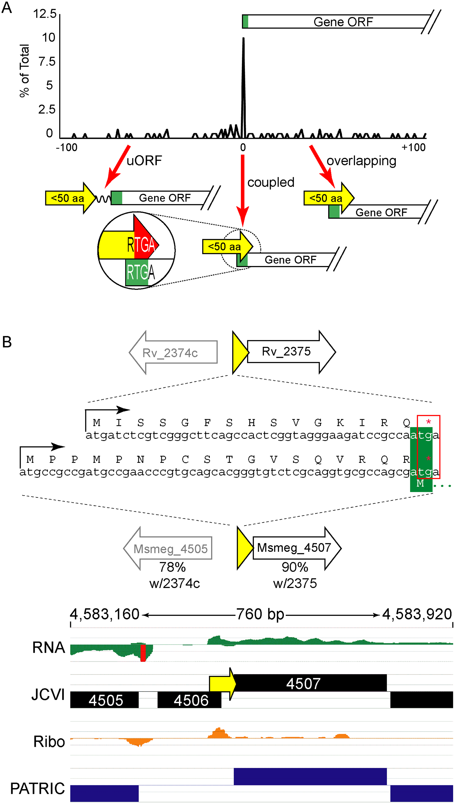 Small protein ORFs are frequently coupled to the ORF downstream.