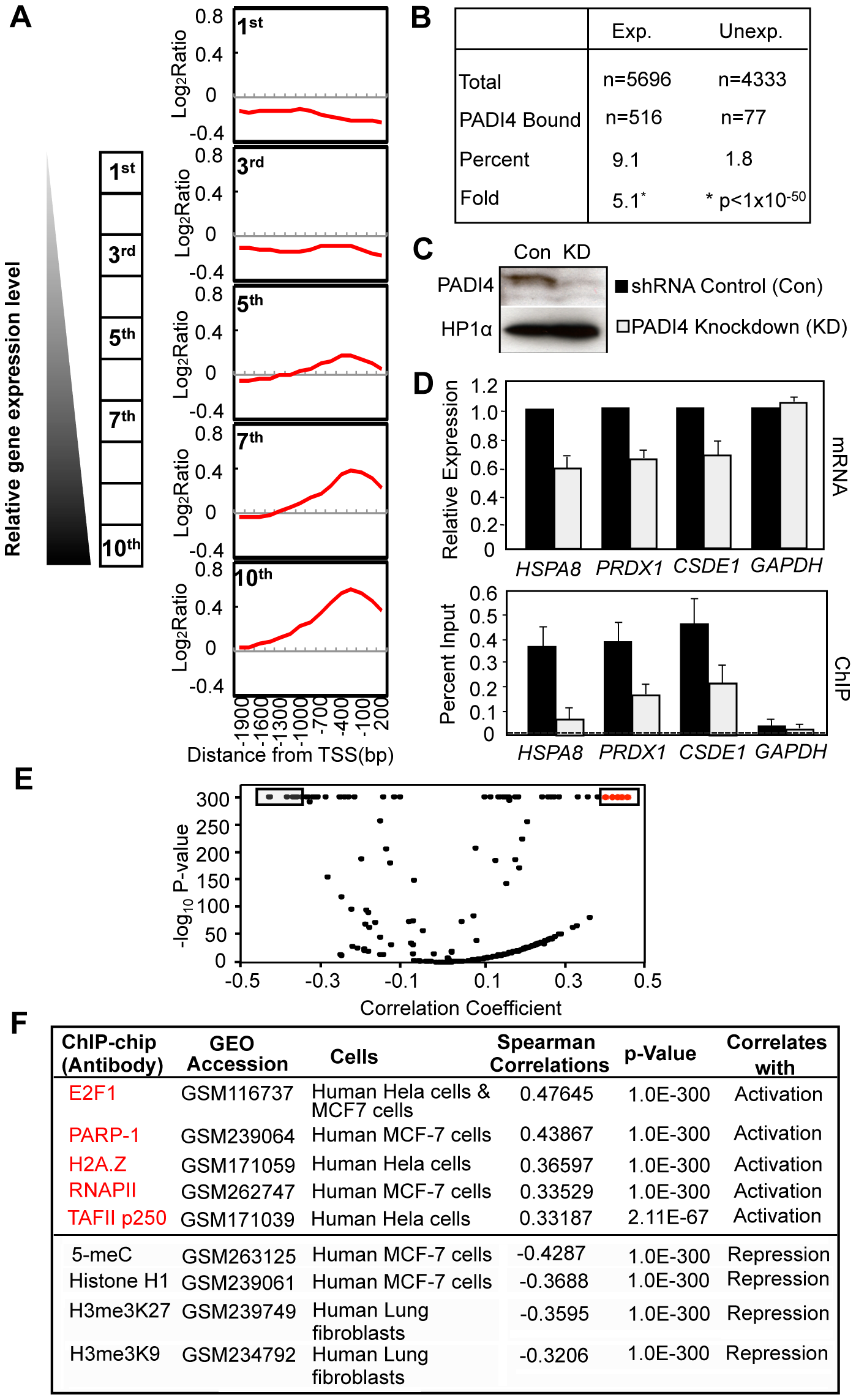 PADI4 recruitment at gene promoters correlates with the actively transcribed genes.