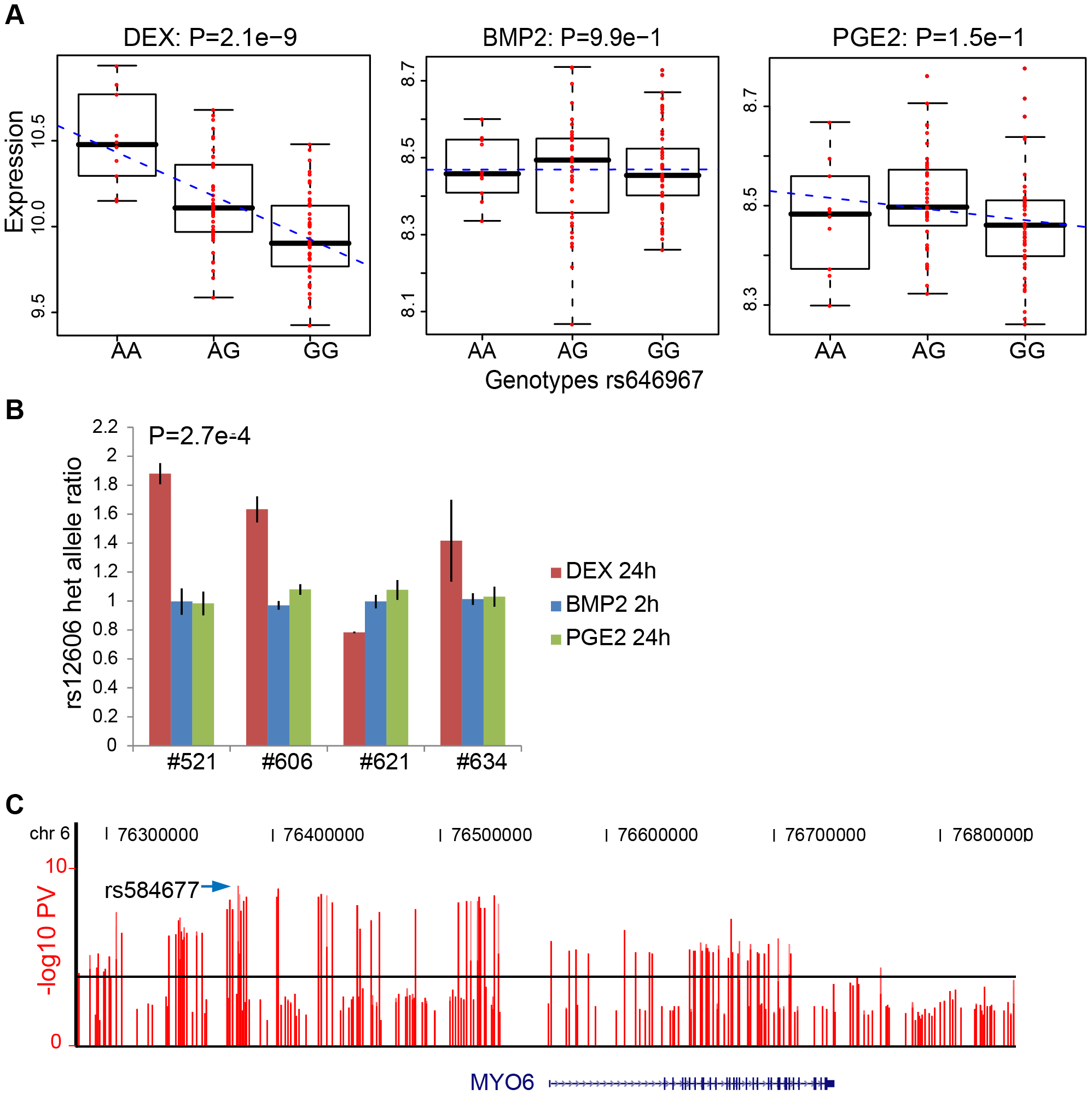 DEX–specific cis-regulation of MYO6 expression.