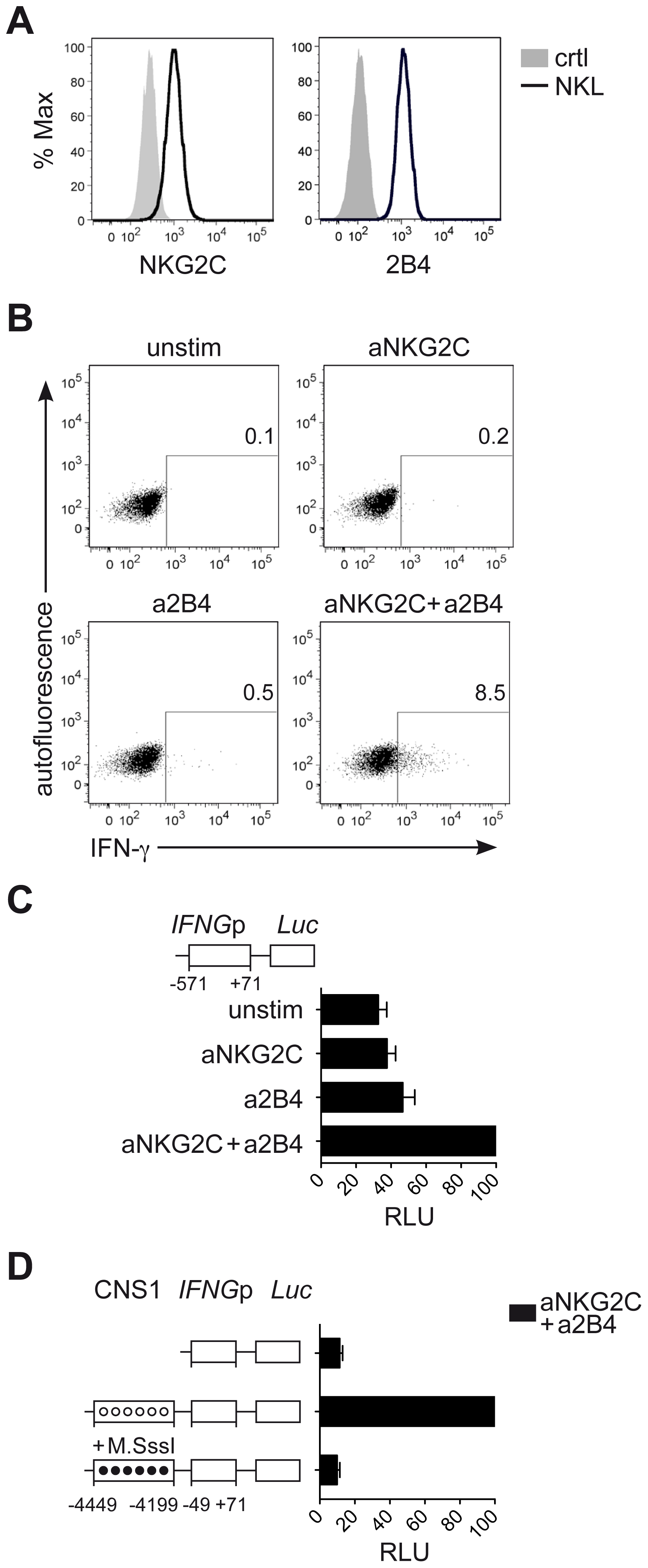 CNS1 accessibility regulates <i>IFNG</i> transcriptional activity induced by NKG2C engagement.