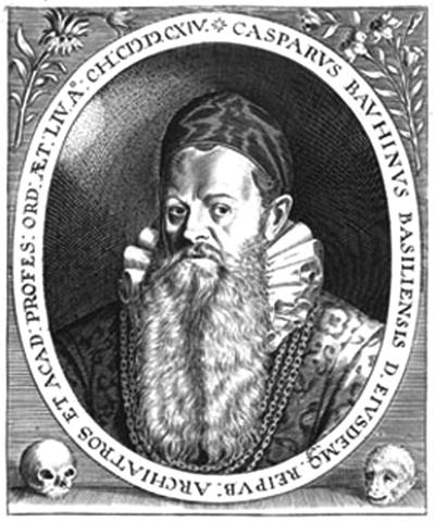 Gaspard (Caspar) Bauhin