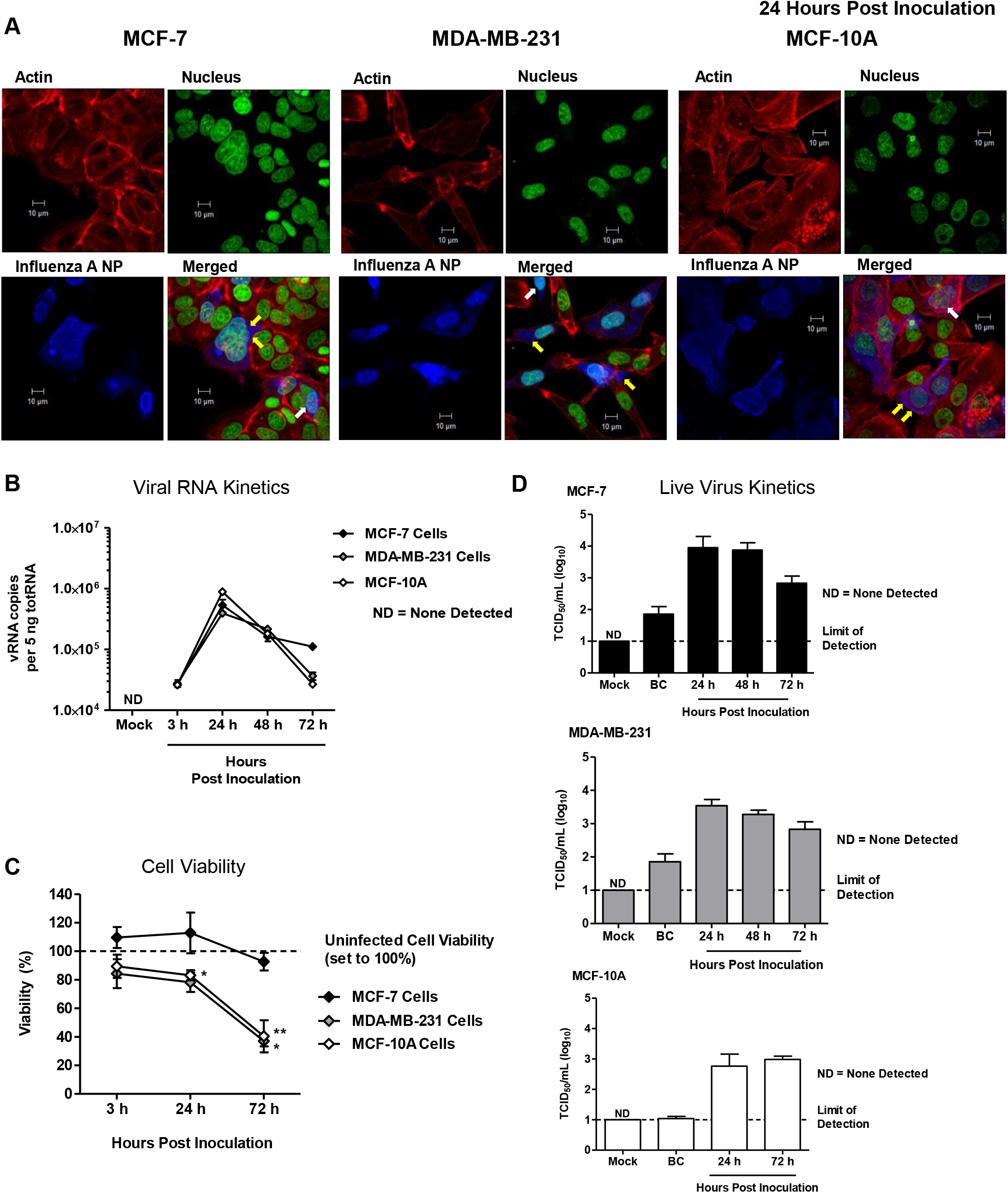 "Human ""normal"" and adenocarcinoma mammary epithelial cells are susceptible and permissive to 2009 H1N1 infection <i>in vitro</i>."