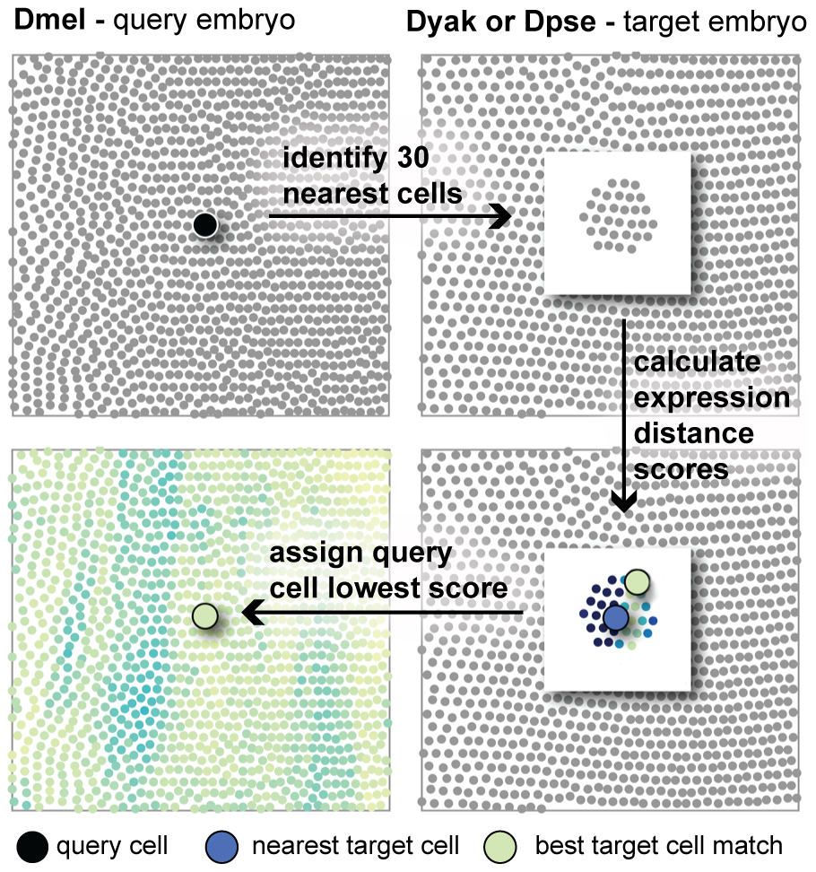 The expression distance metric can be used to search for corresponding cells.