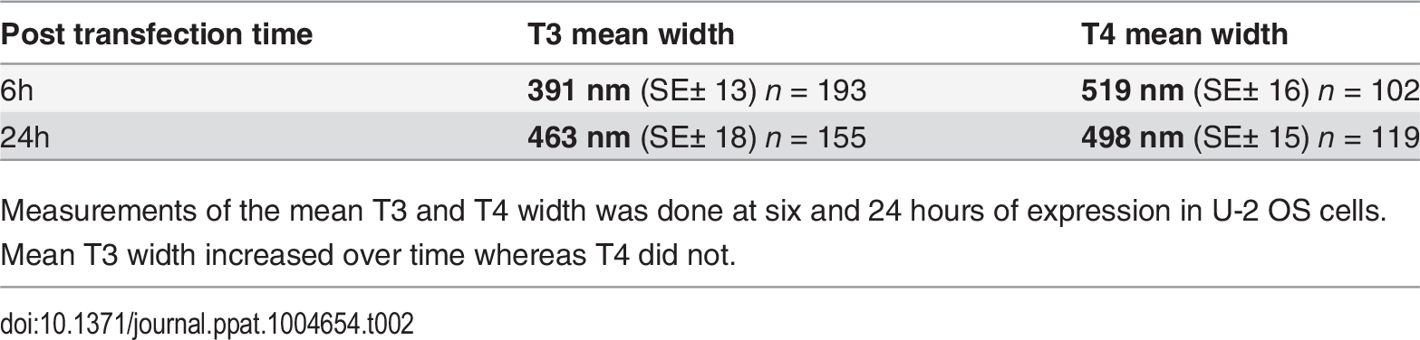 Mean T3 and T4 width after expression in U-2 OS cells.
