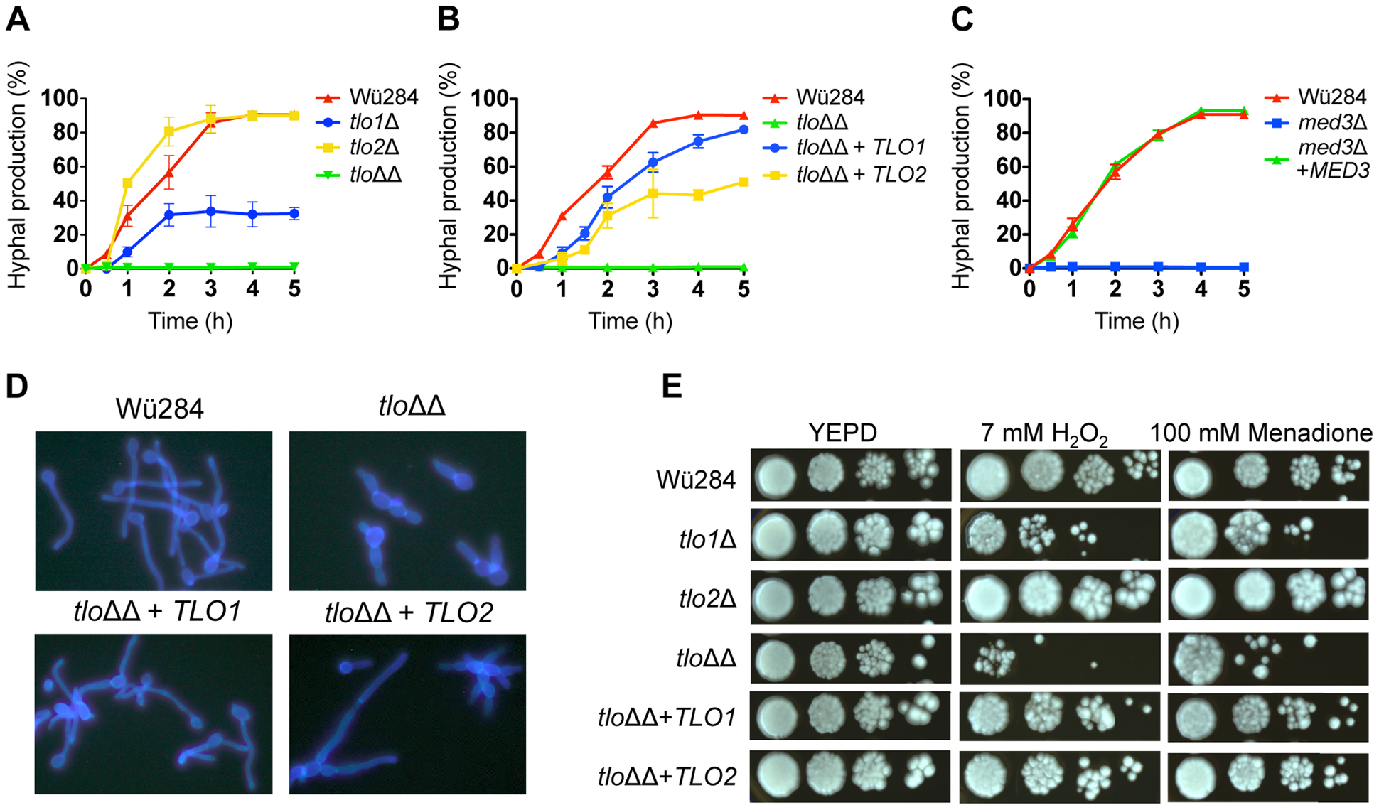 Phenotypic analysis of <i>C. dubliniensis tloΔ</i> and <i>med3</i>Δ mutants.