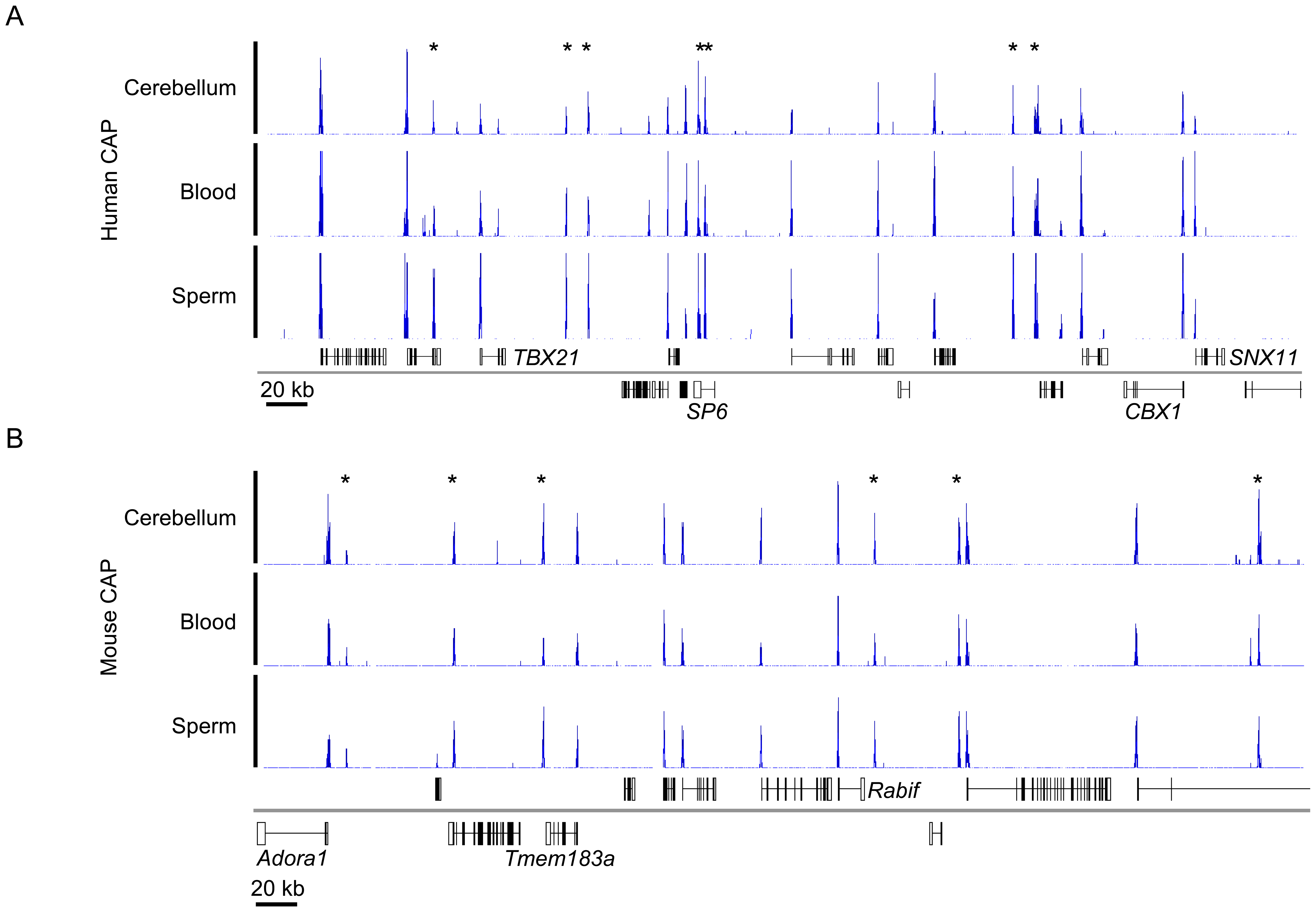 Typical CAP-seq profiles for human and mouse tissues.