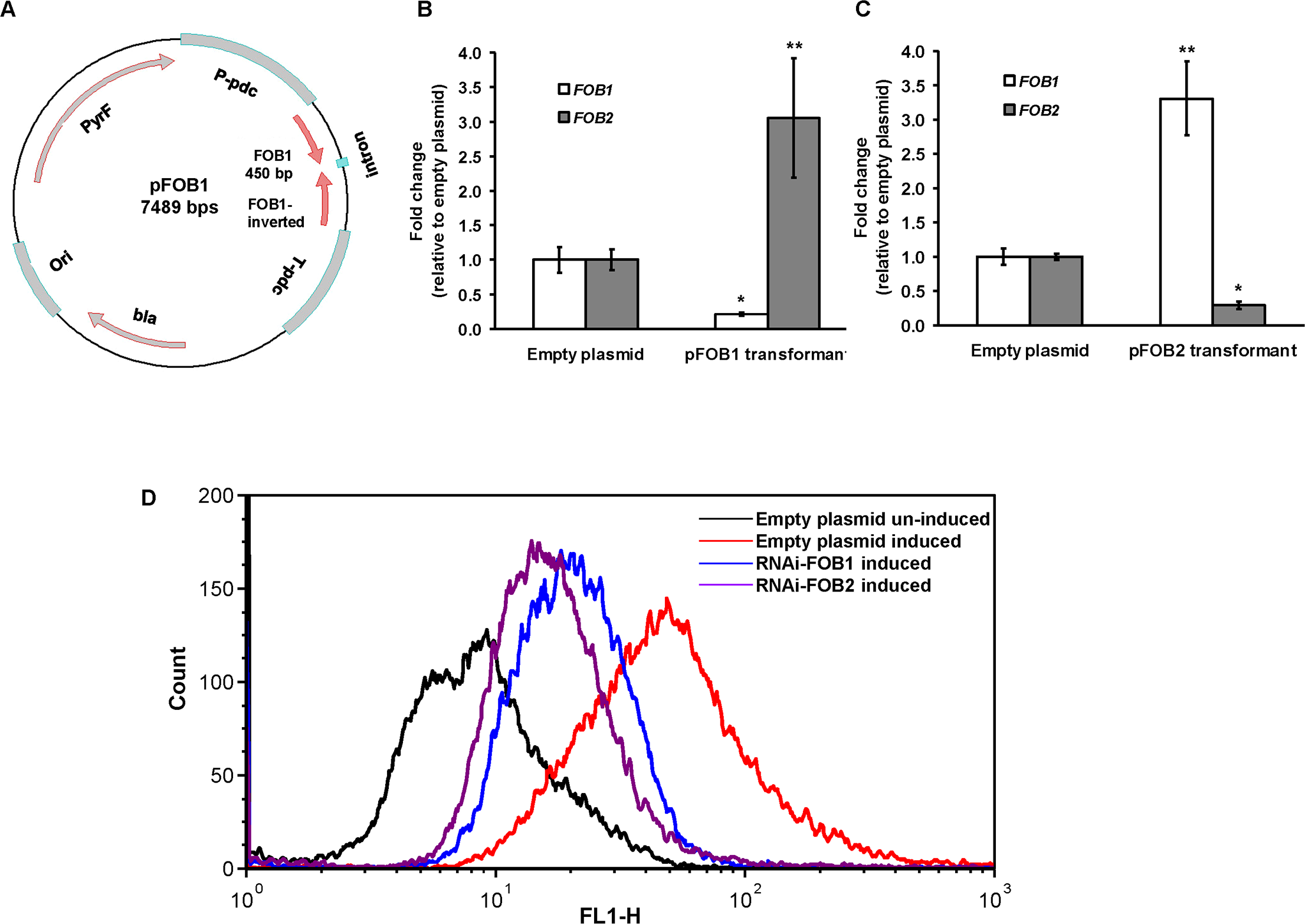 RNA-i targeting a single putative ferrioxamine receptor leads to compensatory effect with the other receptor.