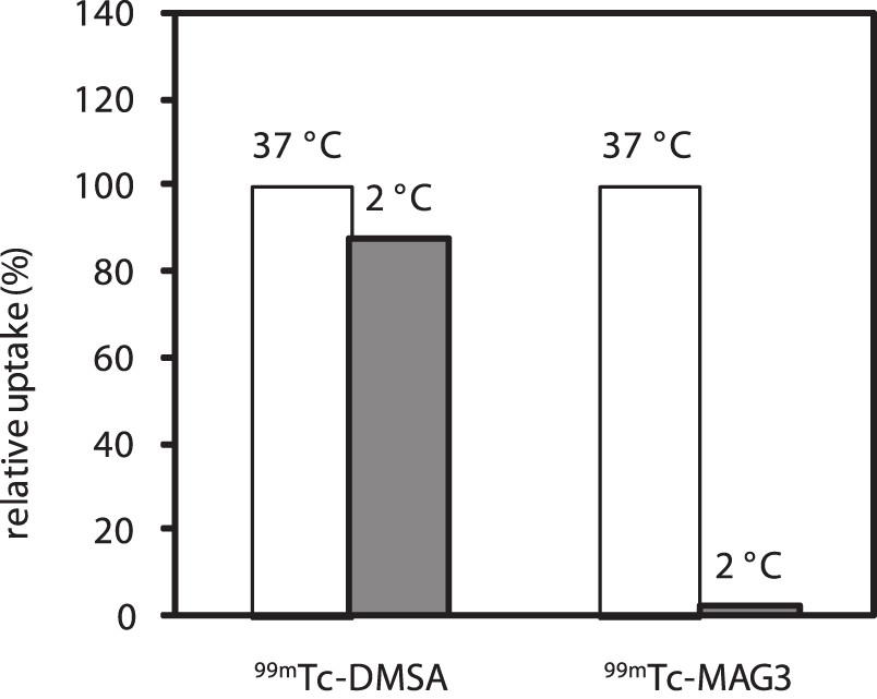 Fig. 2. Relative uptake of <sup>99m</sup>Tc-MAG3 and <sup>99m</sup>Tc-DMSA in the rat renal cells under normal (100%) or lower incubation temperature