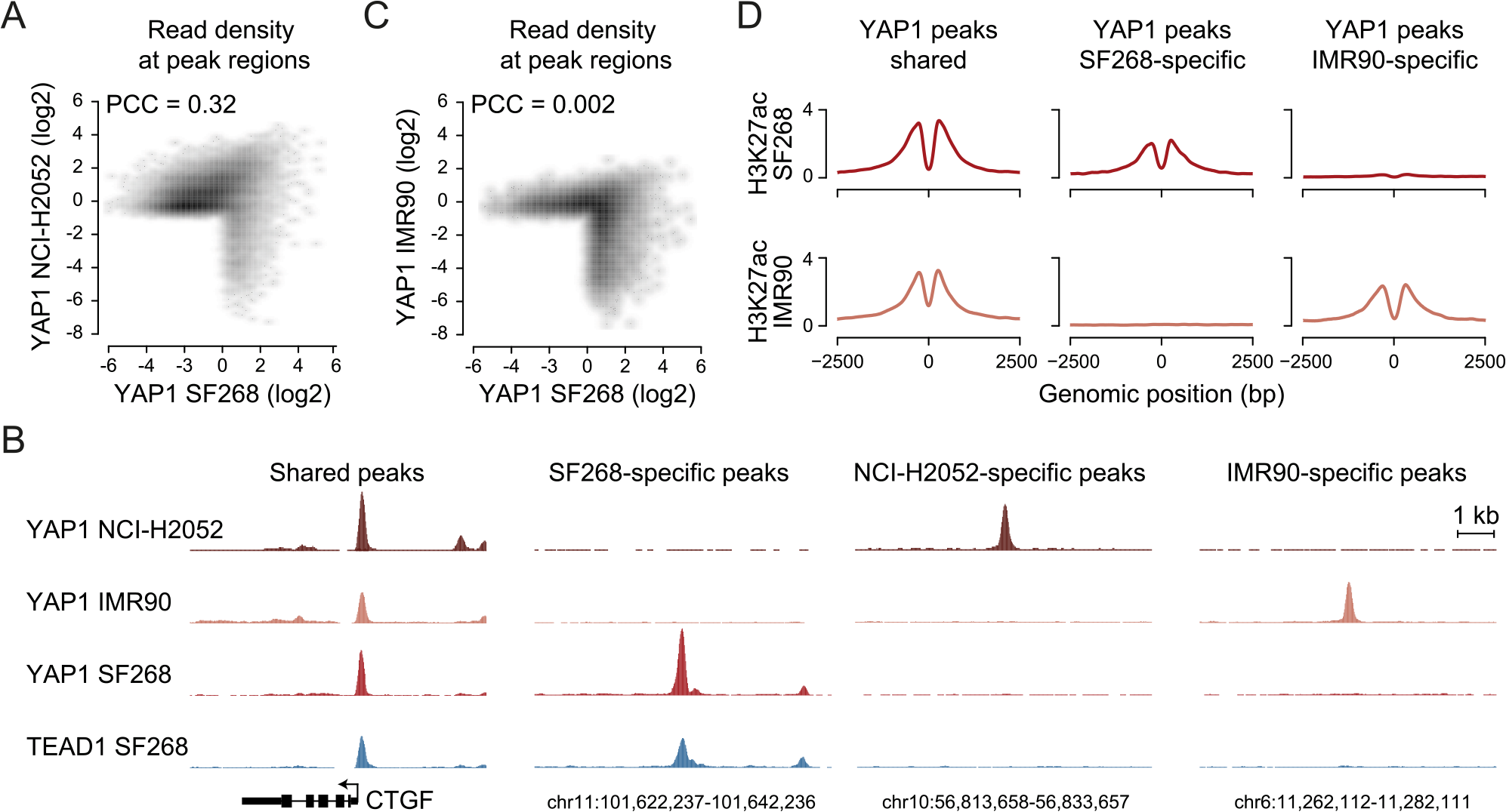 YAP1 binding sites largely overlap in cancer cell lines from distinct lineages.