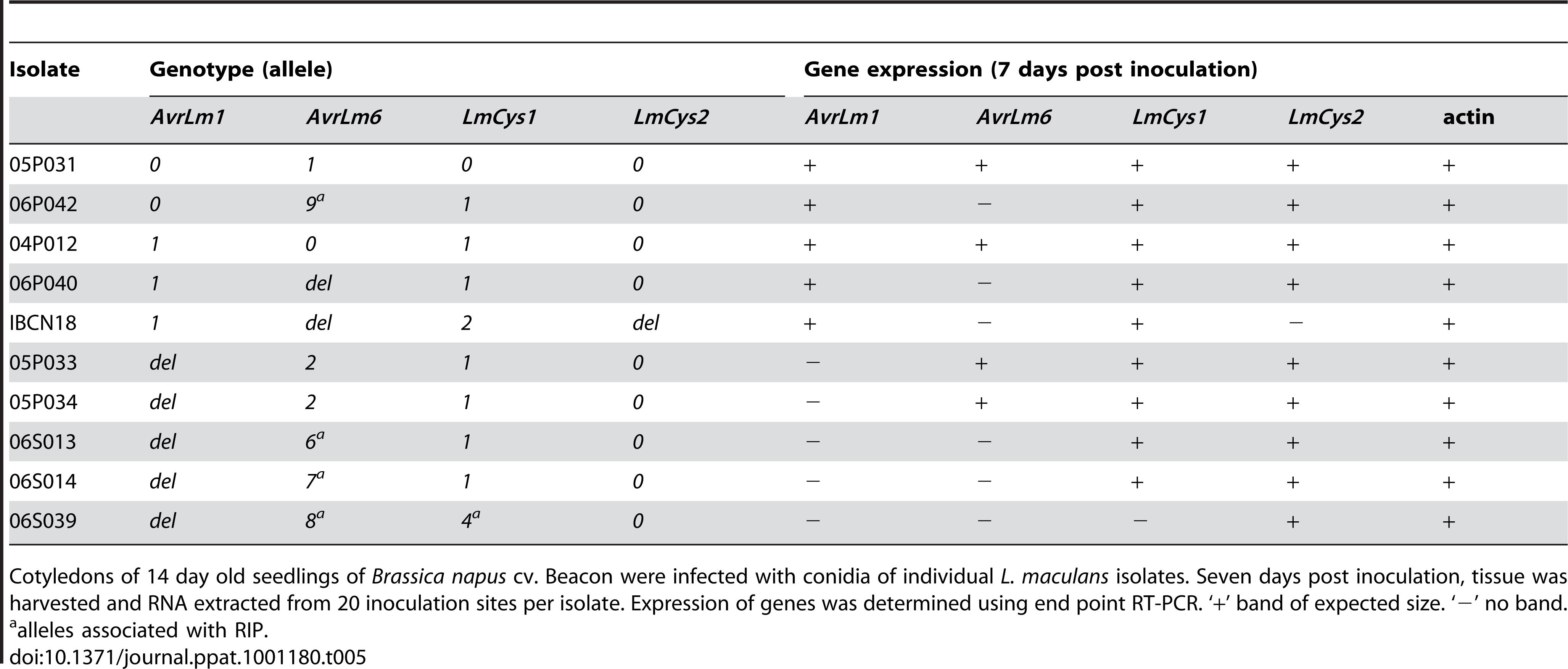 Expression analysis of <i>AvrLm1</i>, <i>AvrLm6</i>, <i>LmCys1</i> and <i>LmCys2</i> alleles in <i>Leptosphaeria maculans</i> isolates <i>in planta</i>.