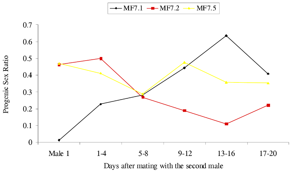 The effect of changing the male on progeny sex ratios produced by <i>C. sexmaculata</i> females.