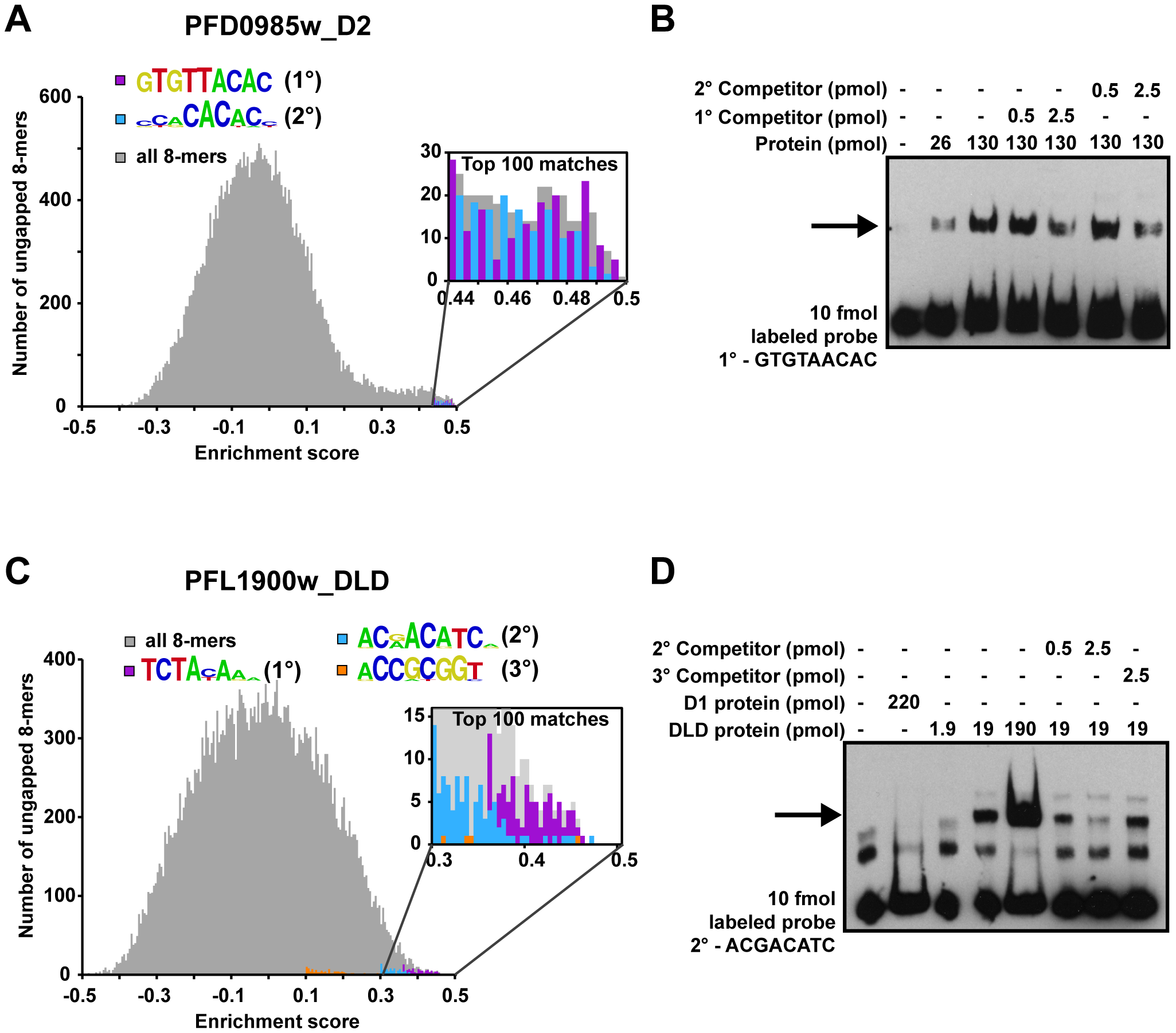 Secondary motifs represent both high- and low- affinity binding sites of ApiAP2 proteins.
