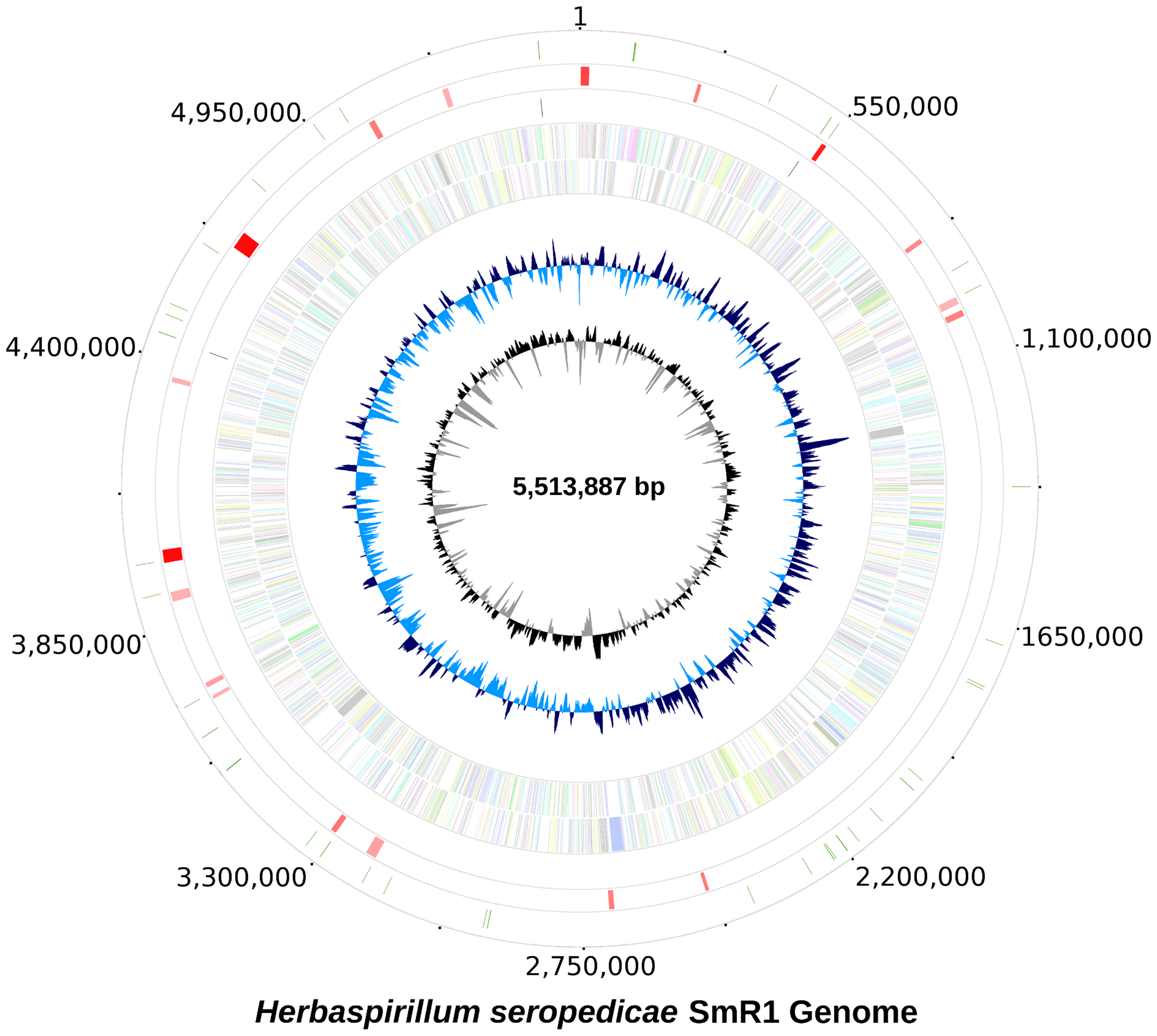 The genome of <i>Herbaspirillum seropedicae</i> SmR1.