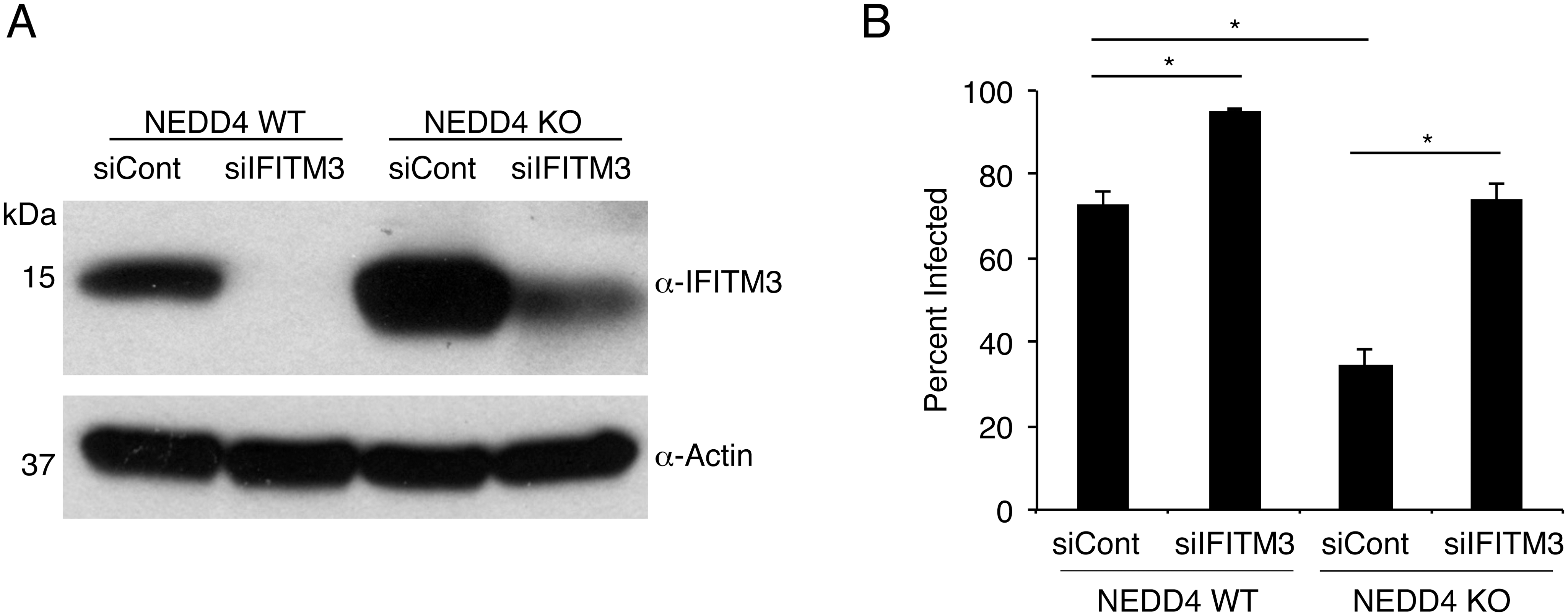 NEDD4 regulates cellular susceptibility to influenza virus infection by controlling IFITM3 levels.
