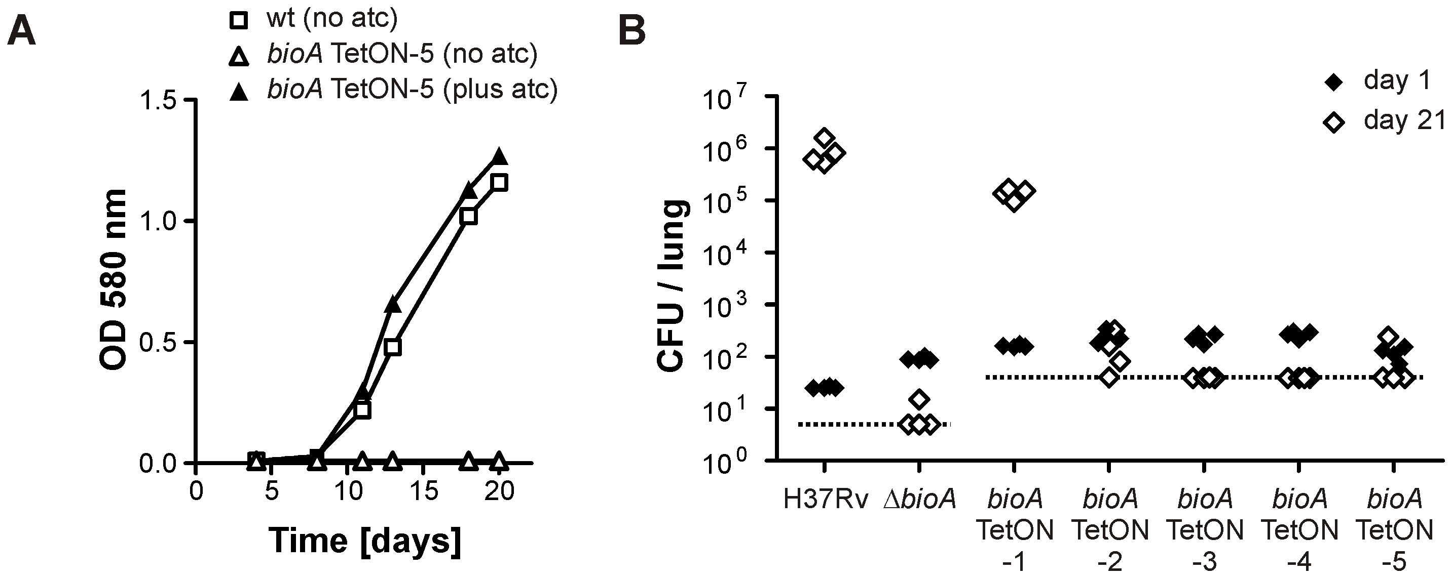 Growth of <i>Mtb bioA</i> TetON-5 in biotin free liquid media and of all mutants in mice without doxy.
