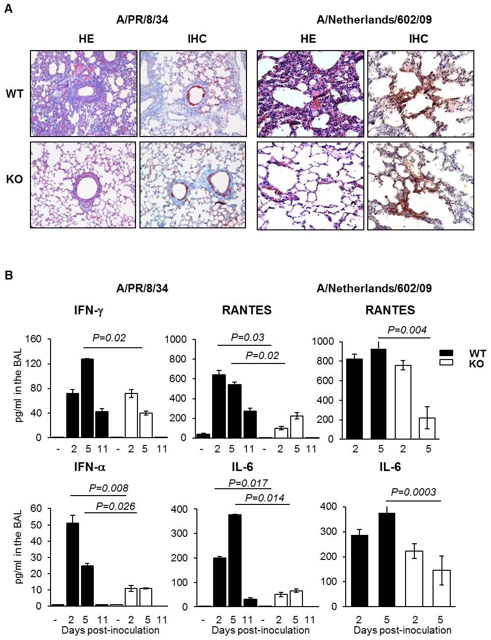 Plasminogen-deficiency prevents severe inflammation.