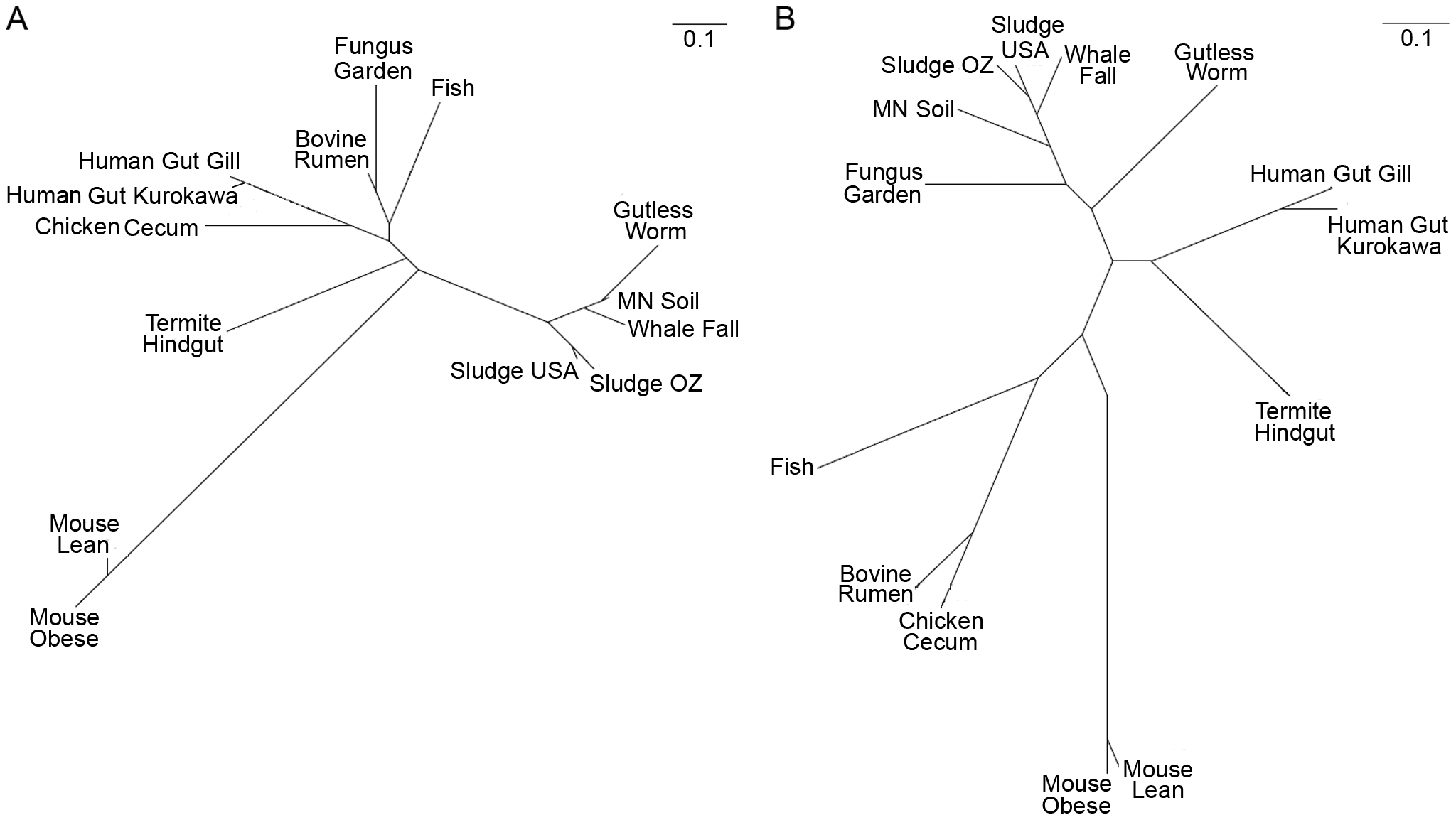 CAZy clustering of the fungus garden metagenome.