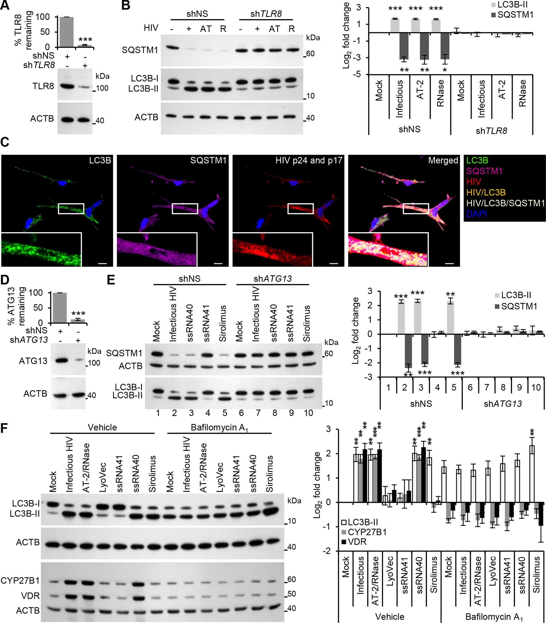 HIV induces autophagy in human macrophages through TLR8.