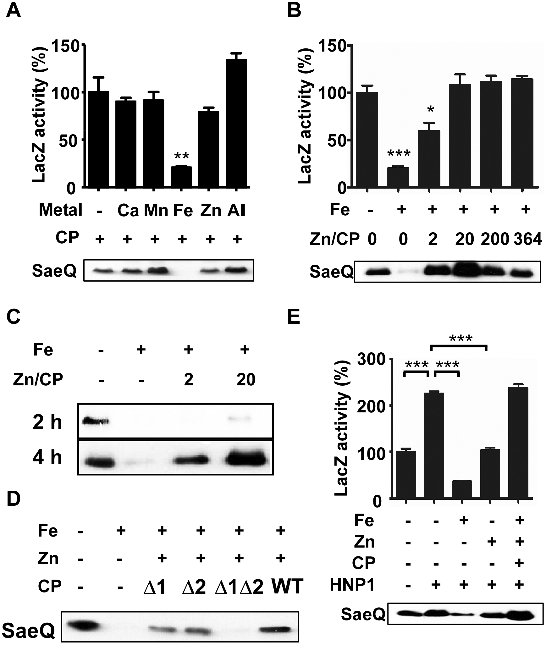 Calprotectin protects the SaeRS TCS from the metal-mediated repression.