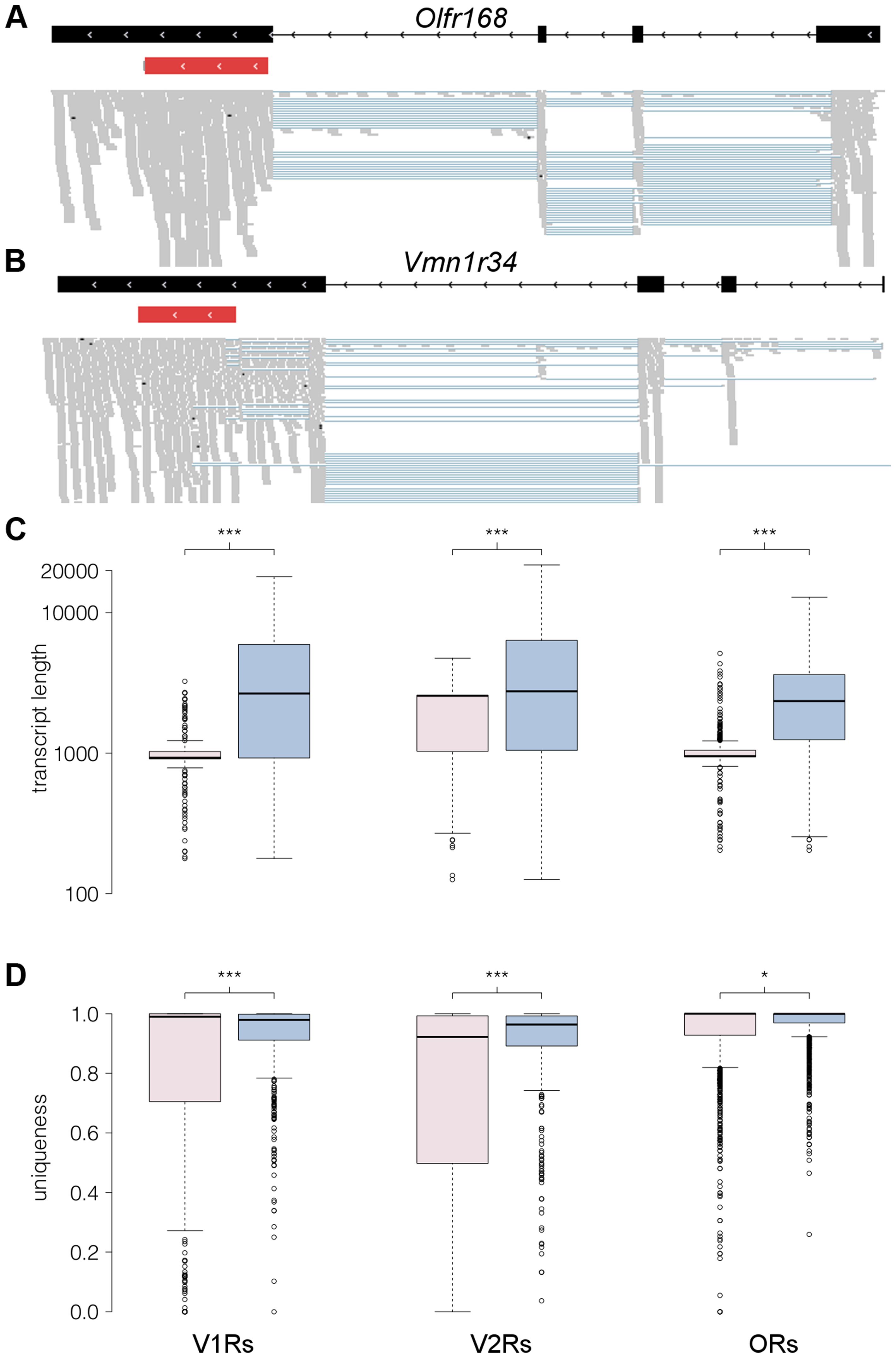 RNAseq provides comprehensive gene models for ORs and VRs.