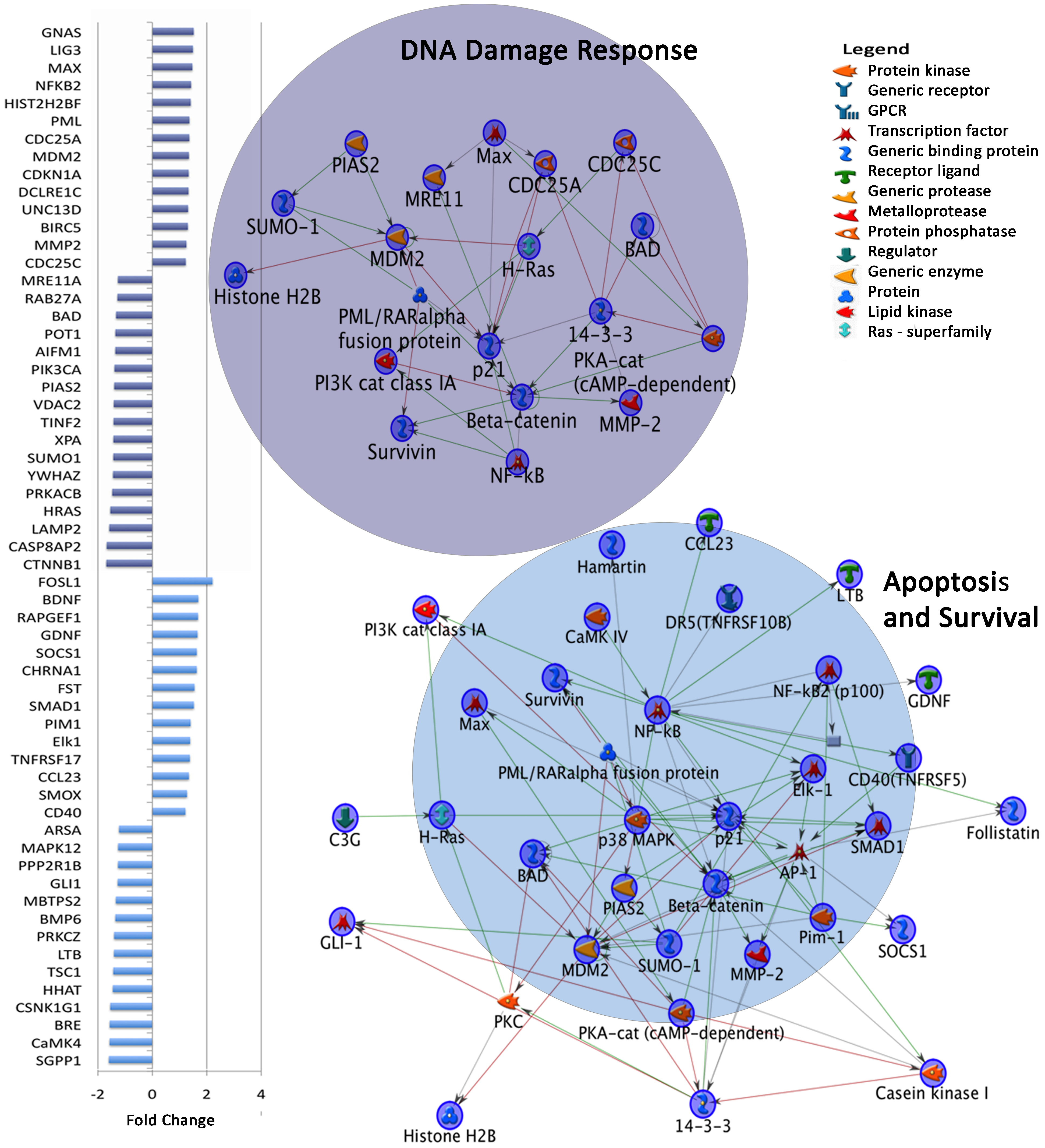 Dysregulated gene expression in top two MetaCore Map Folders in autism independent of age.